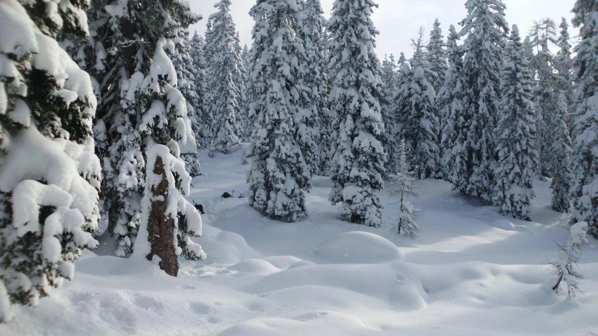 цена картинки зимний снежный коми лес стрижки