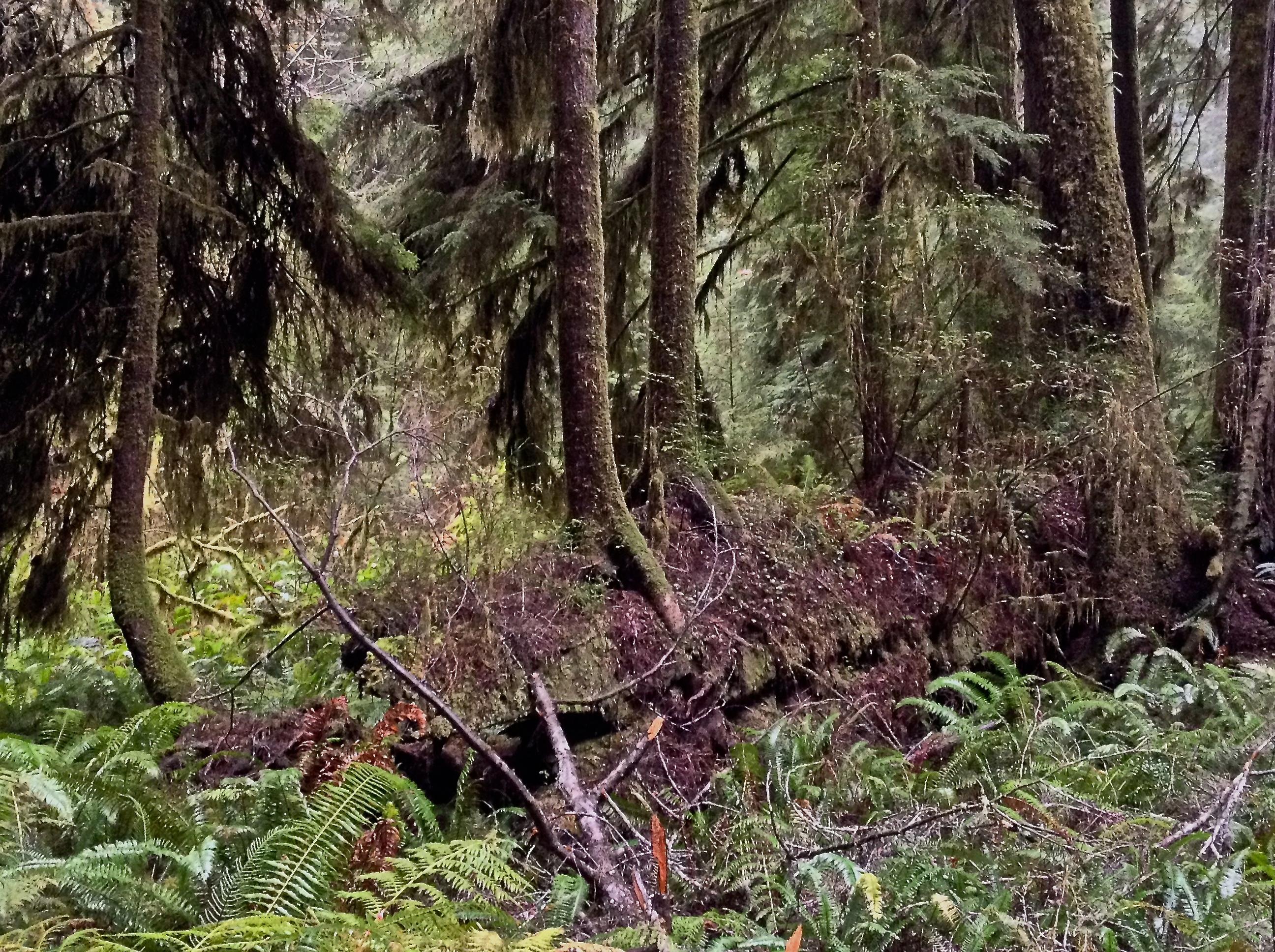 картинки лесного сообщества должна будет защитить