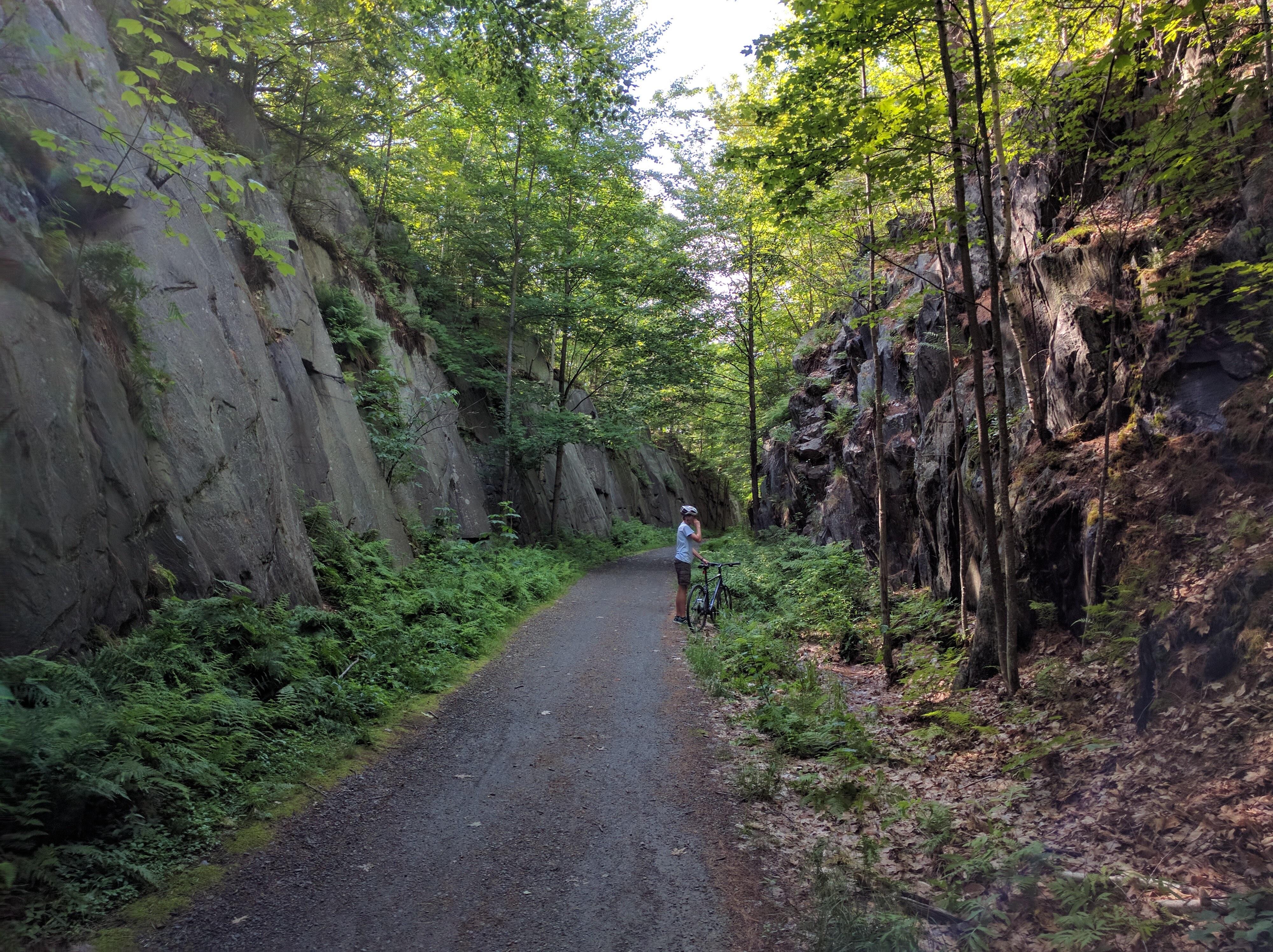 Cây Rừng Đường Mòn Rừng Nhiệt Đới Đường Thuỷ Cơ Sở Hạ Tầng Rừng Cây Khu