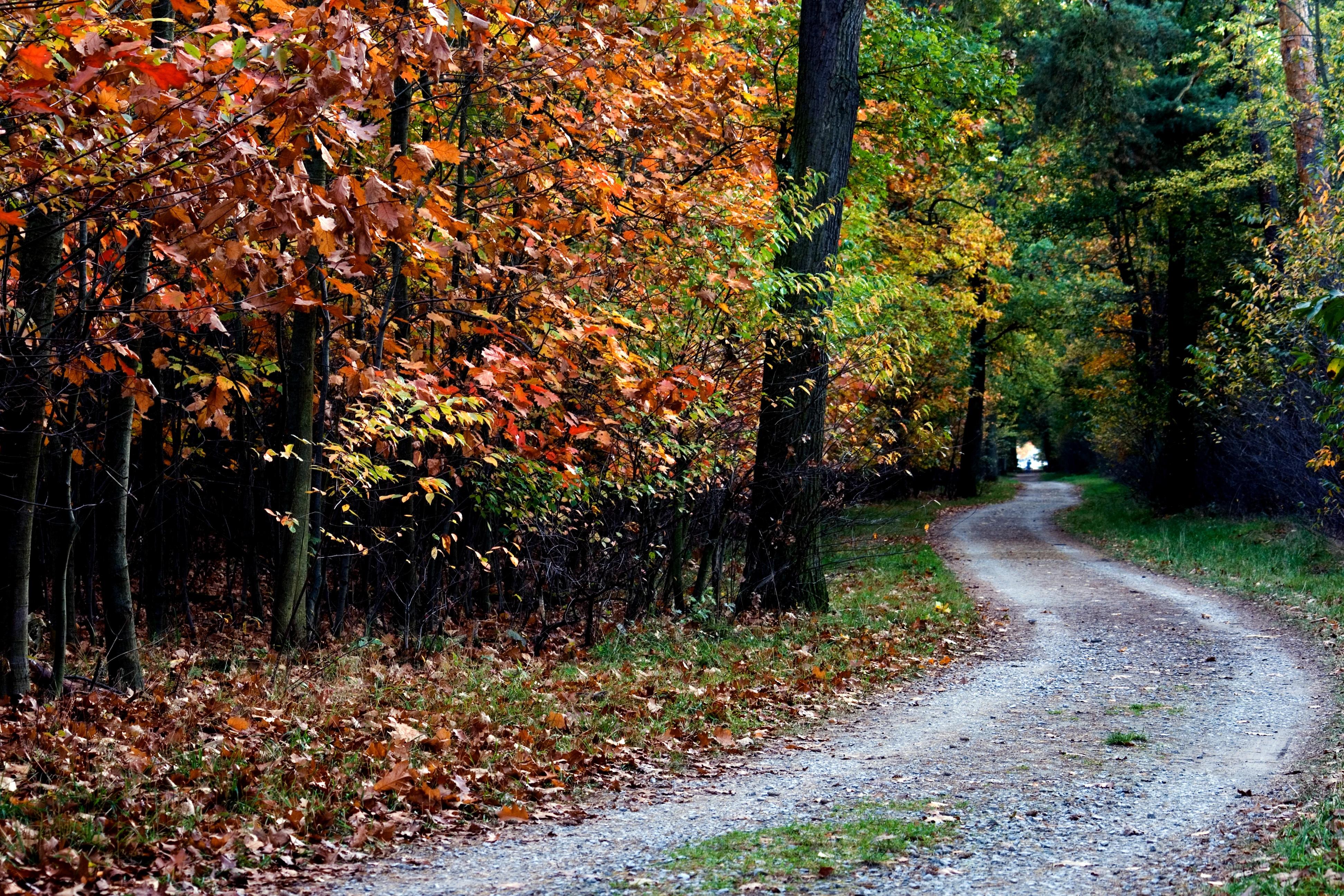 Free Images : tree, forest, trail, sunlight, leaf, flower, color ...