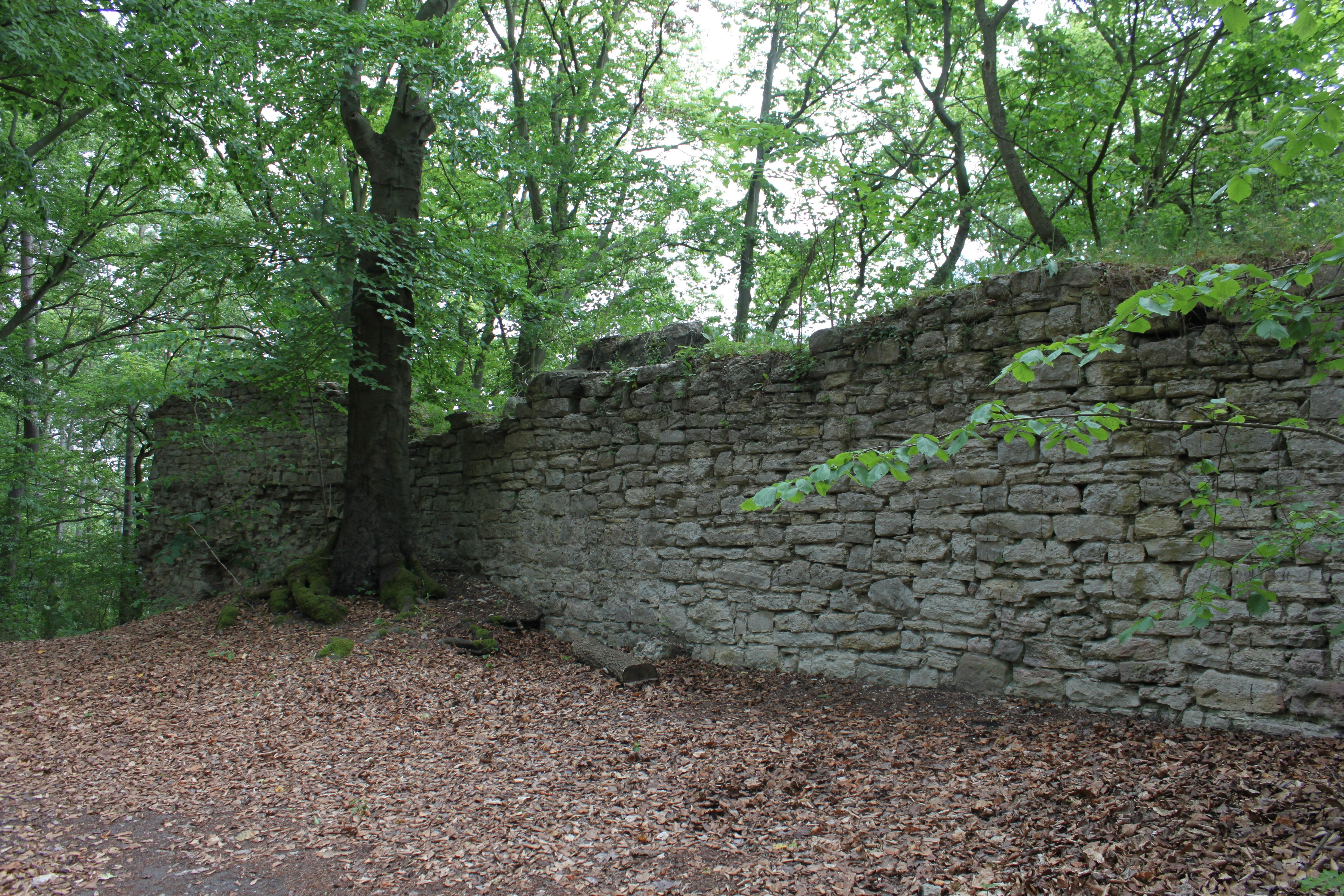 Stenen Muur Tuin : Gratis afbeeldingen boom bos spoor bodem kasteel stenen