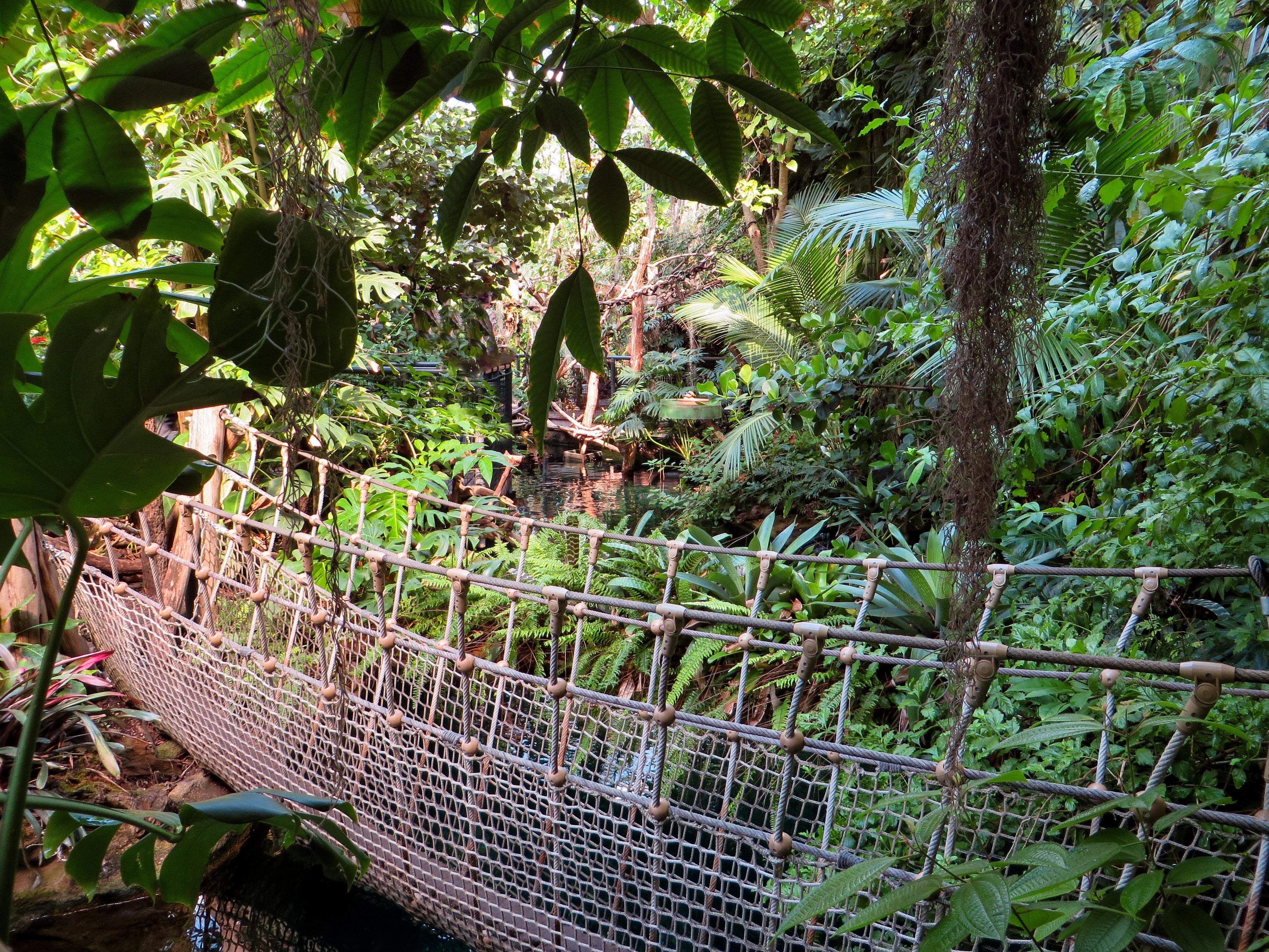 Images gratuites arbre r gion sauvage branche plante for Plante jungle