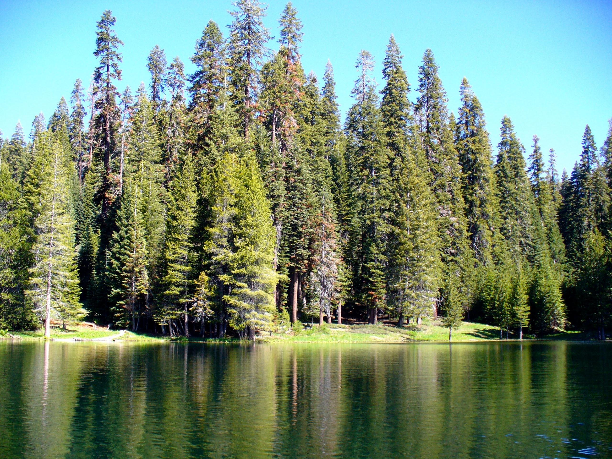 Fotos Gratis : árbol, Bosque, Desierto, Montaña, Planta