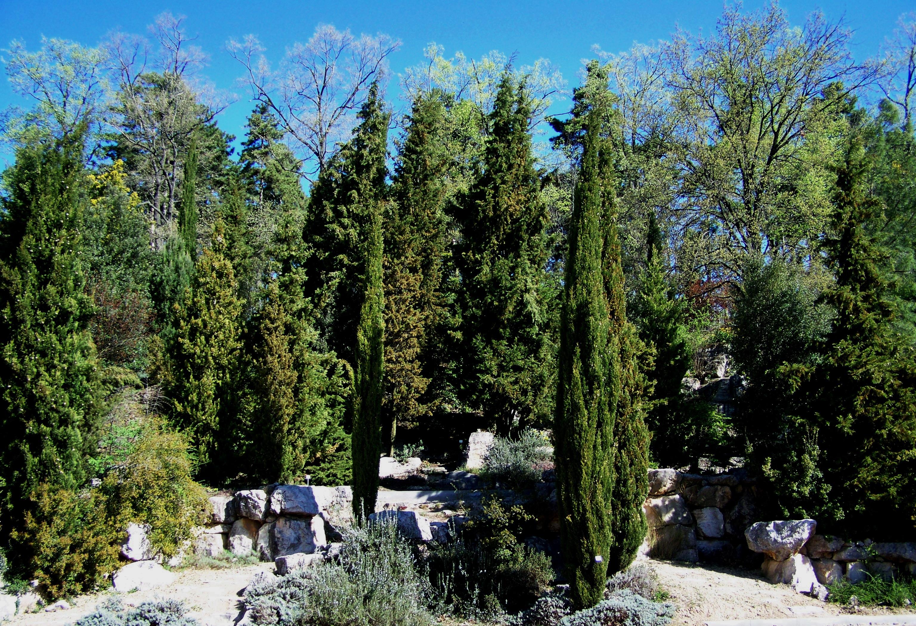 Fotos gratis rbol bosque desierto monta a planta for Arboles jardin hoja perenne