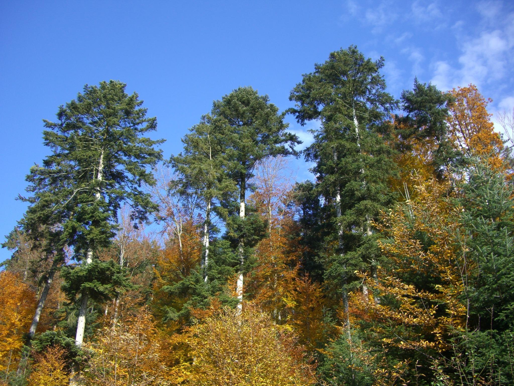 смешанные деревья картинки