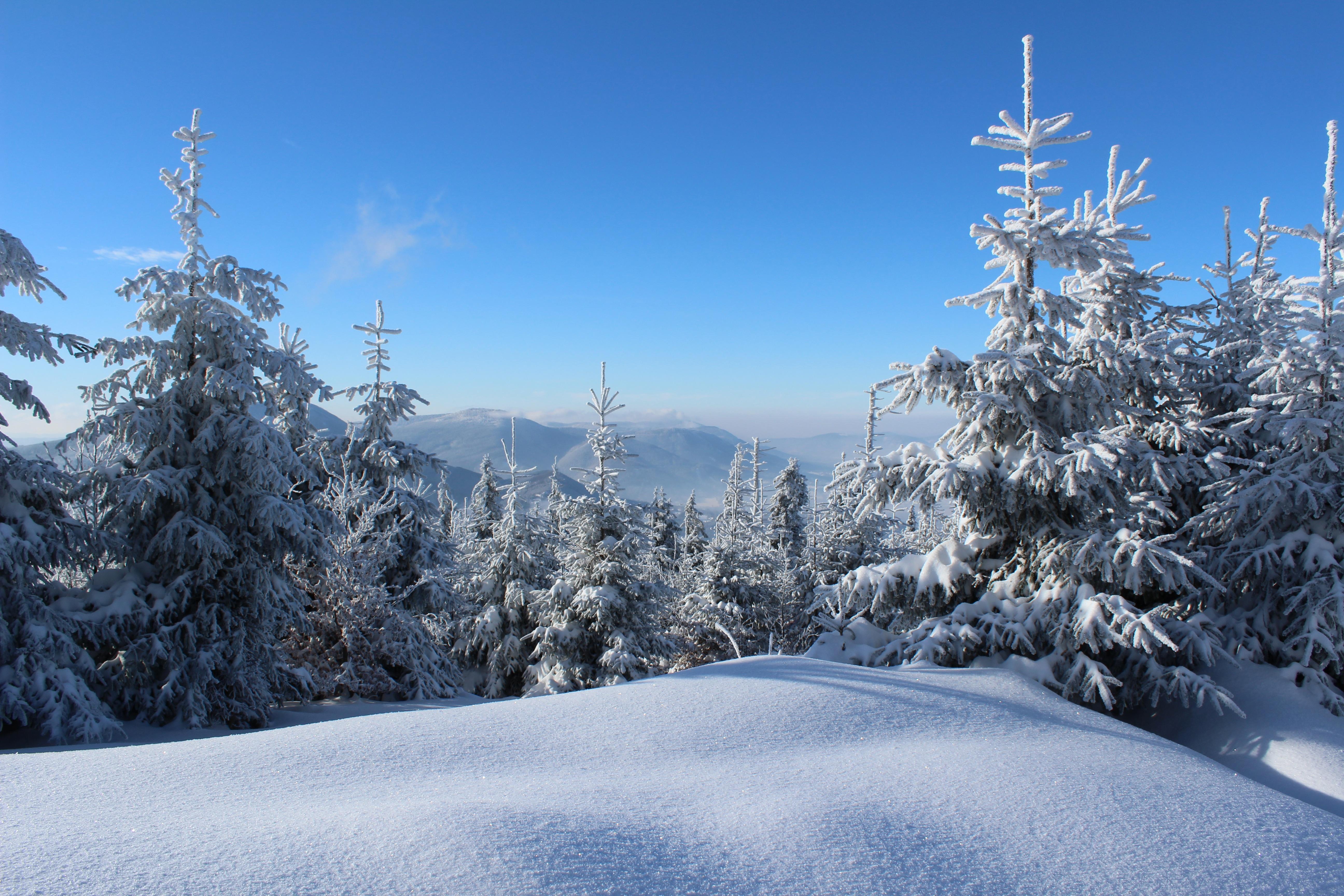 Images gratuites arbre for t r gion sauvage montagne - Photos de neige gratuites ...