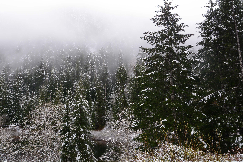 Fotos Gratis : árbol, Bosque, Desierto, Montaña, Nieve