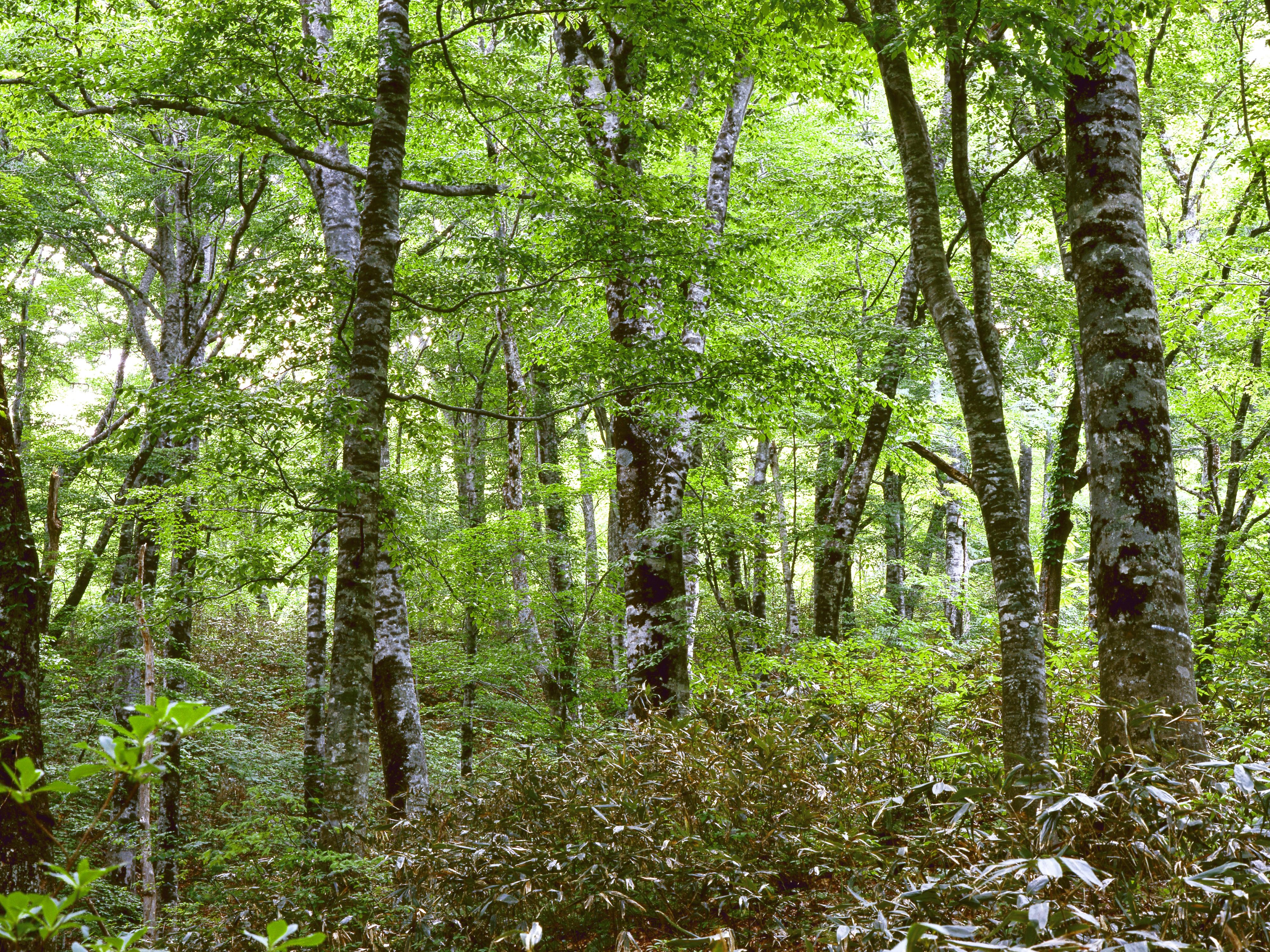 этом картинки растения смешанных лесов этой фотографии