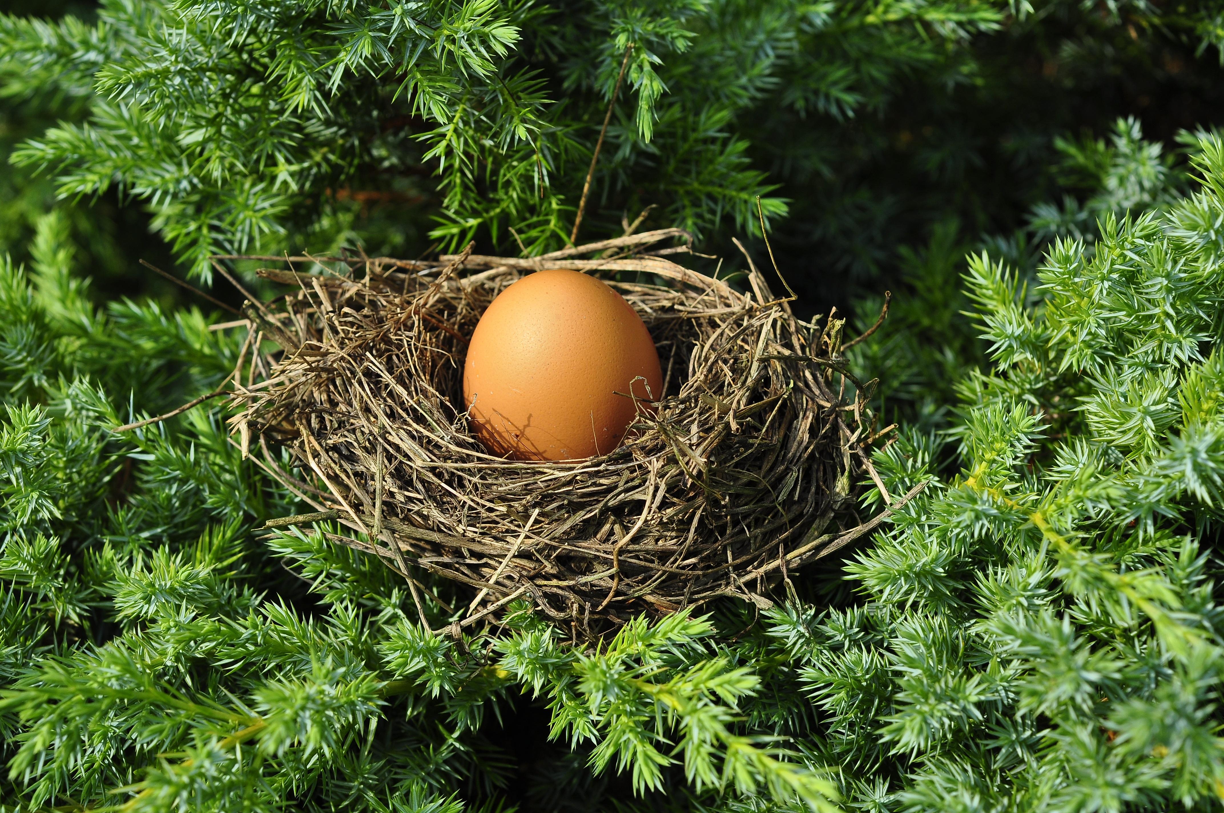 pohon rumput cabang burung taman pohon cemara telur dekorasi Natal sarang burung stopkontak pengemasan cocok sarang