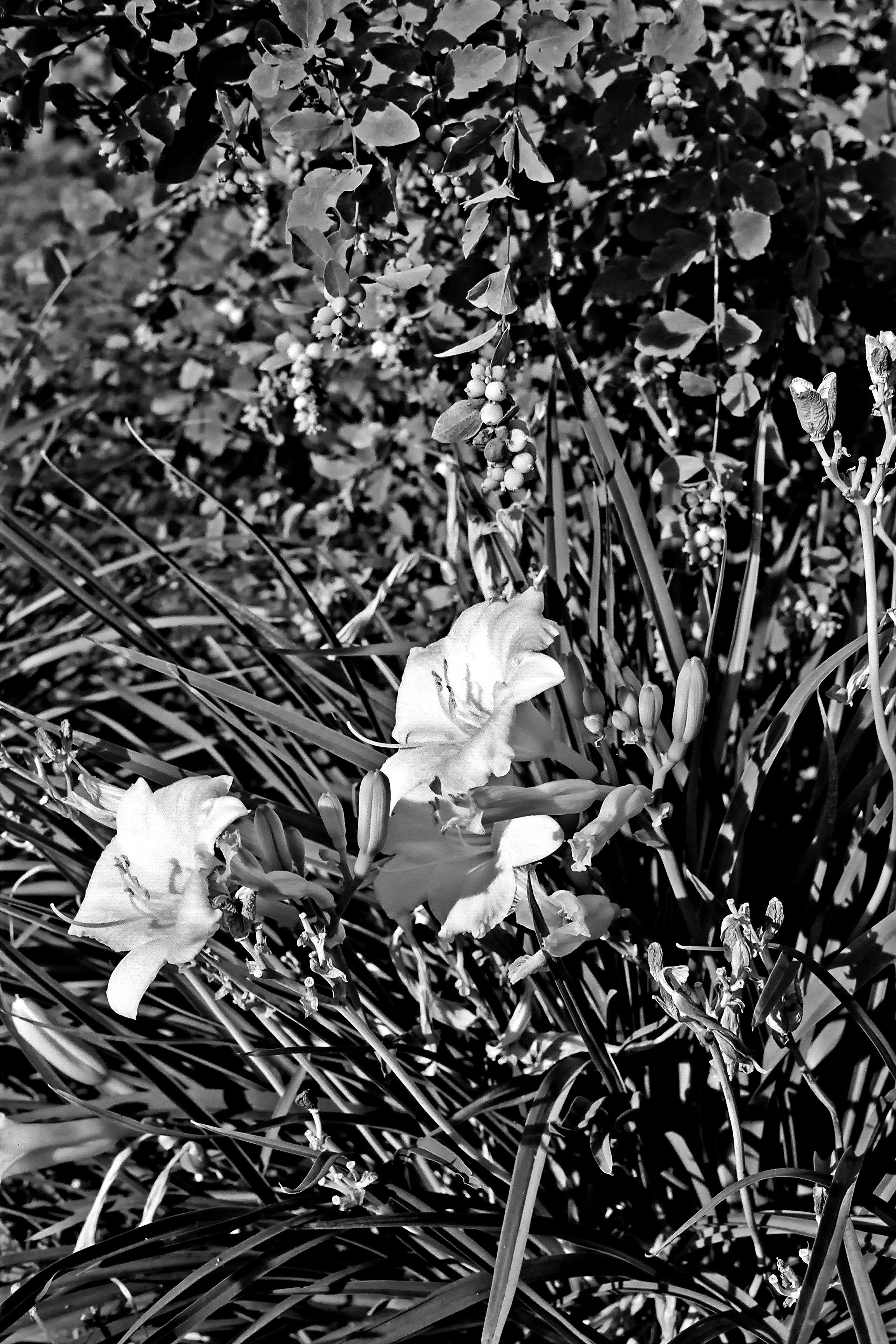 Fotos Gratis árbol Césped Rama En Blanco Y Negro Planta