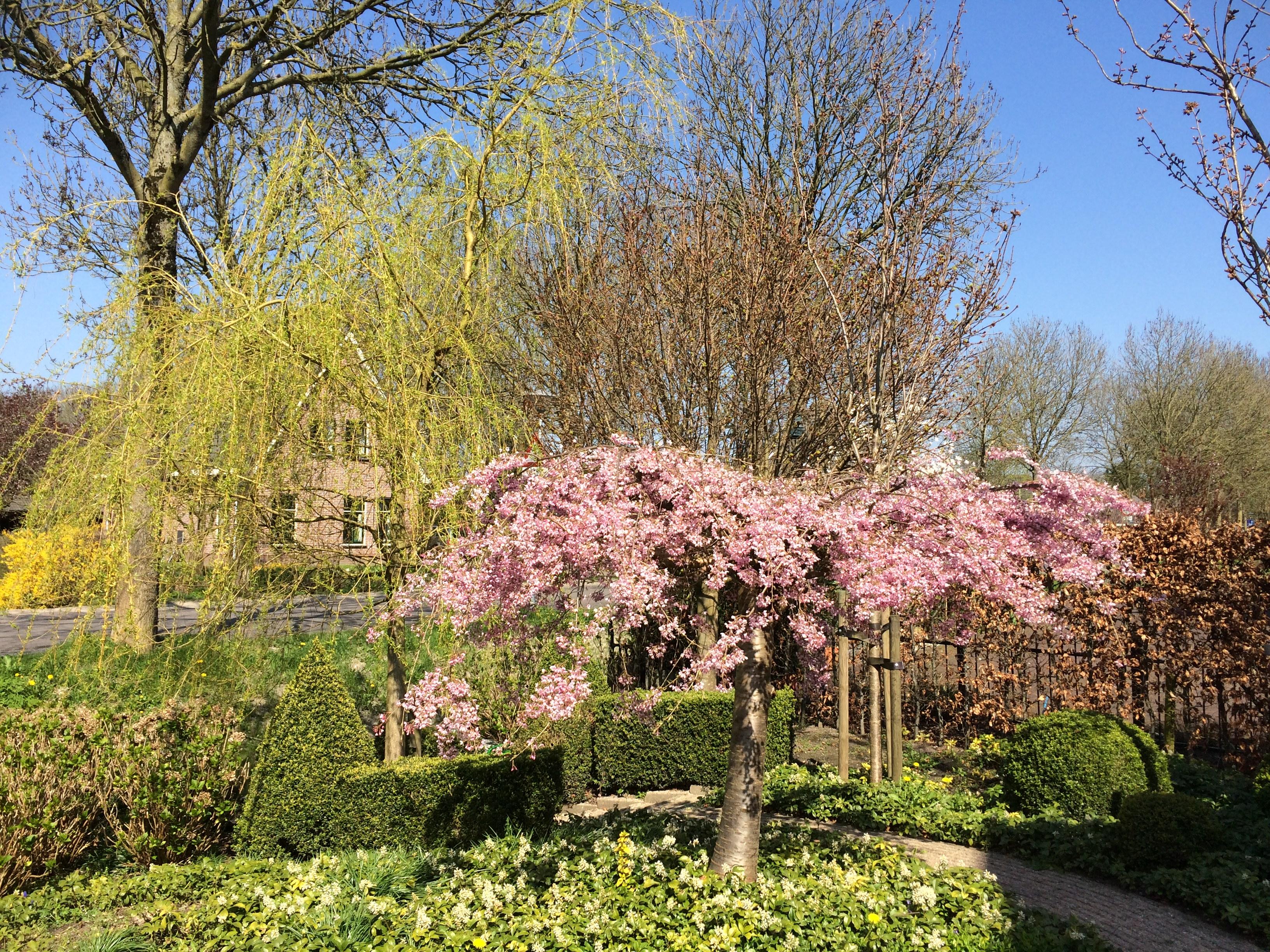 Images gratuites arbre herbe branche plante for Plante arbuste
