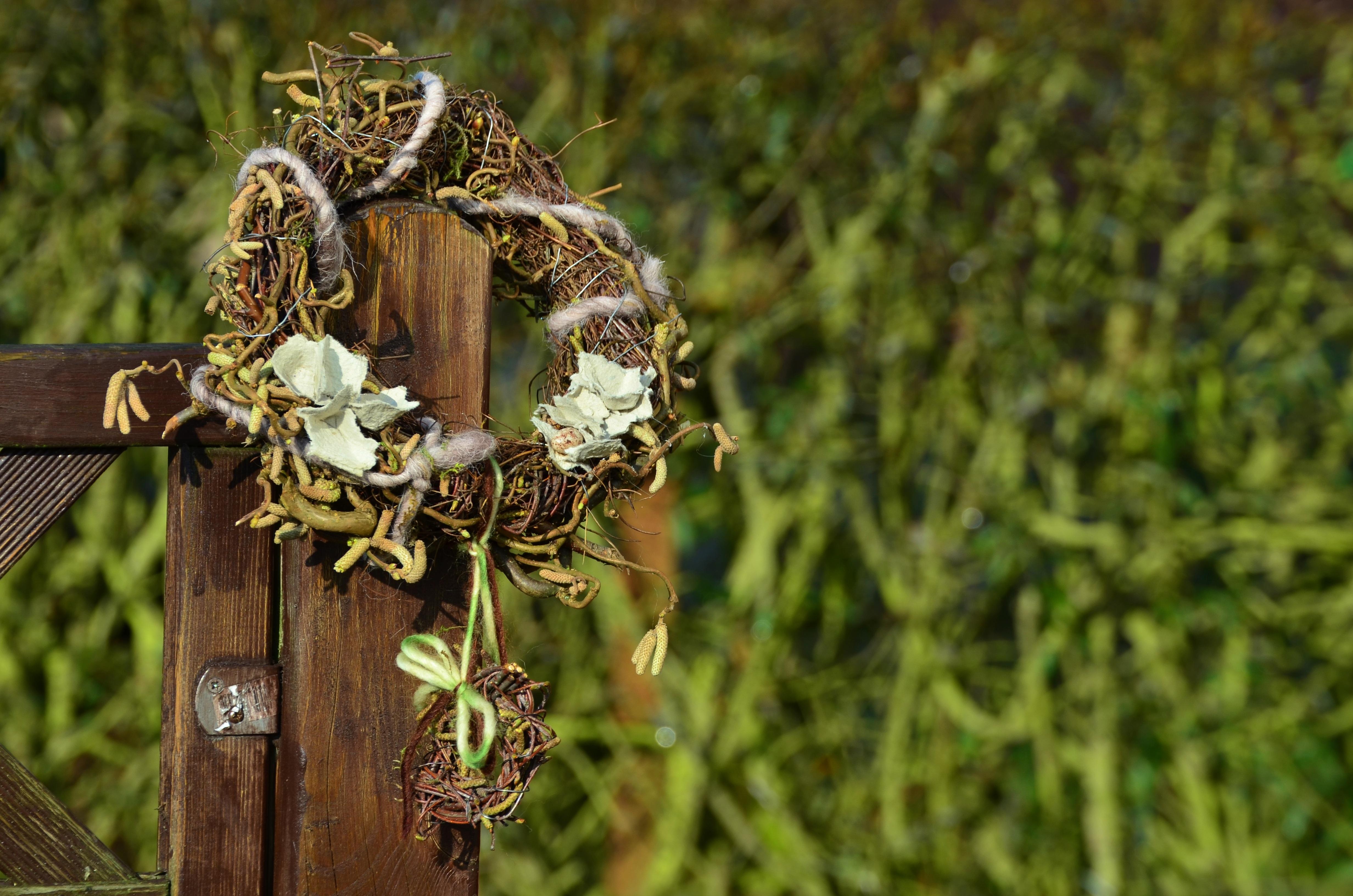 Free Images : tree, grass, branch, leaf, flower, wildlife, spring ...