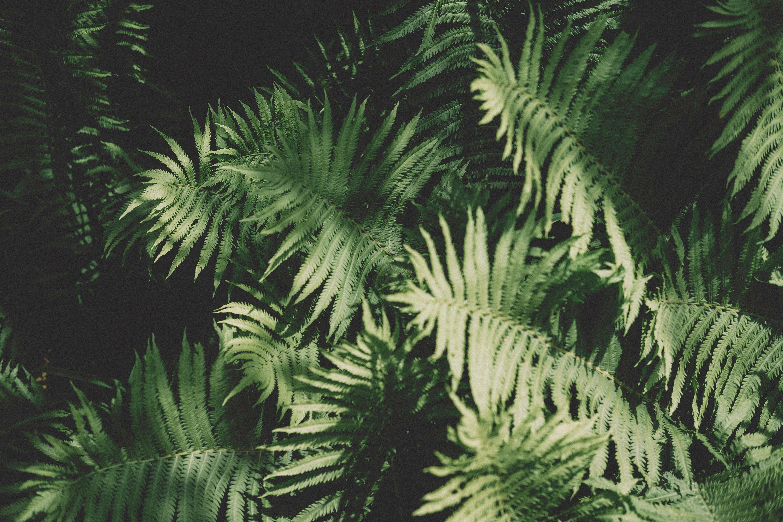 Images gratuites arbre herbe branche feuille ombre for Plante jungle