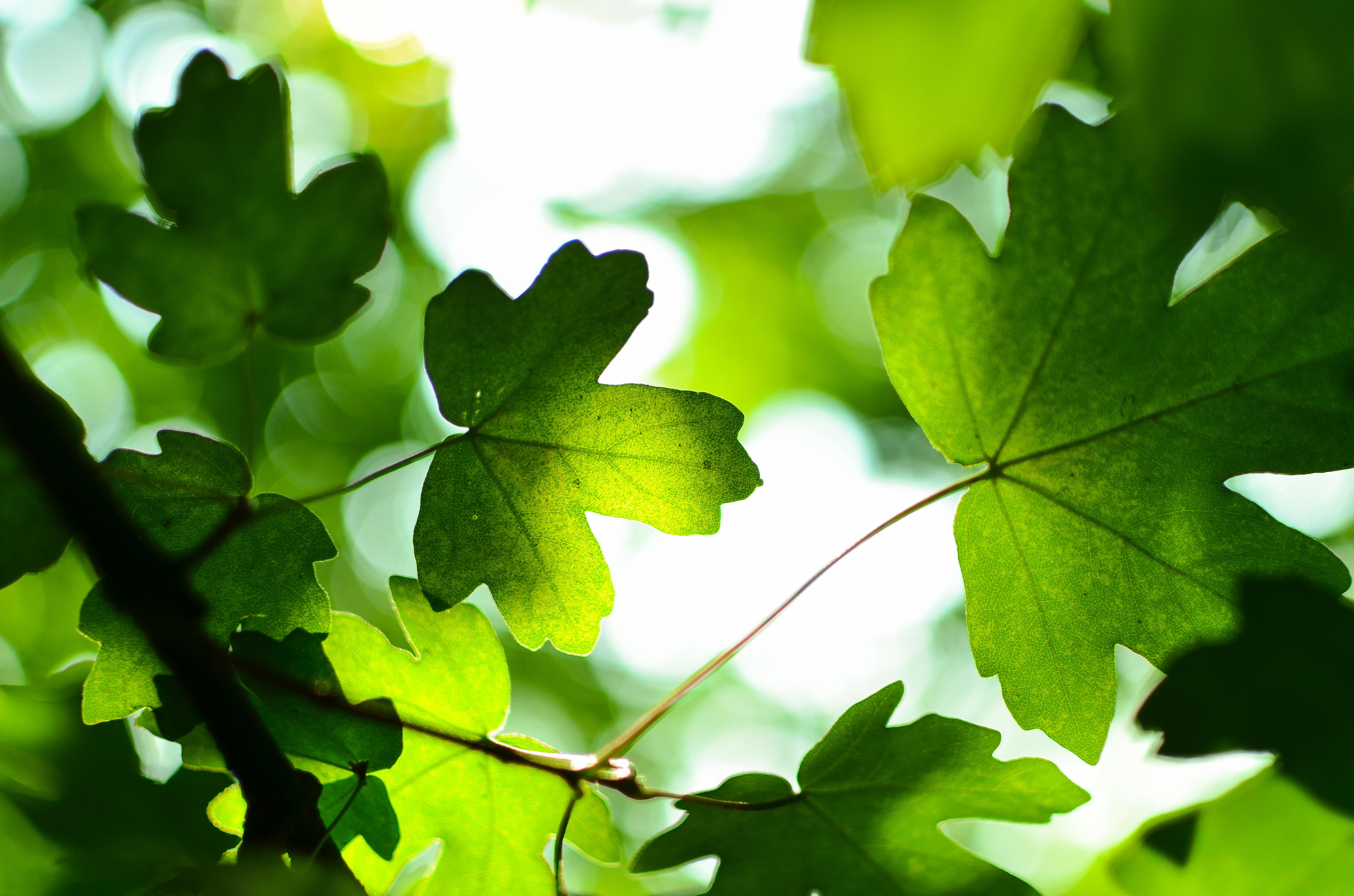 Картинки красивый лист дерева