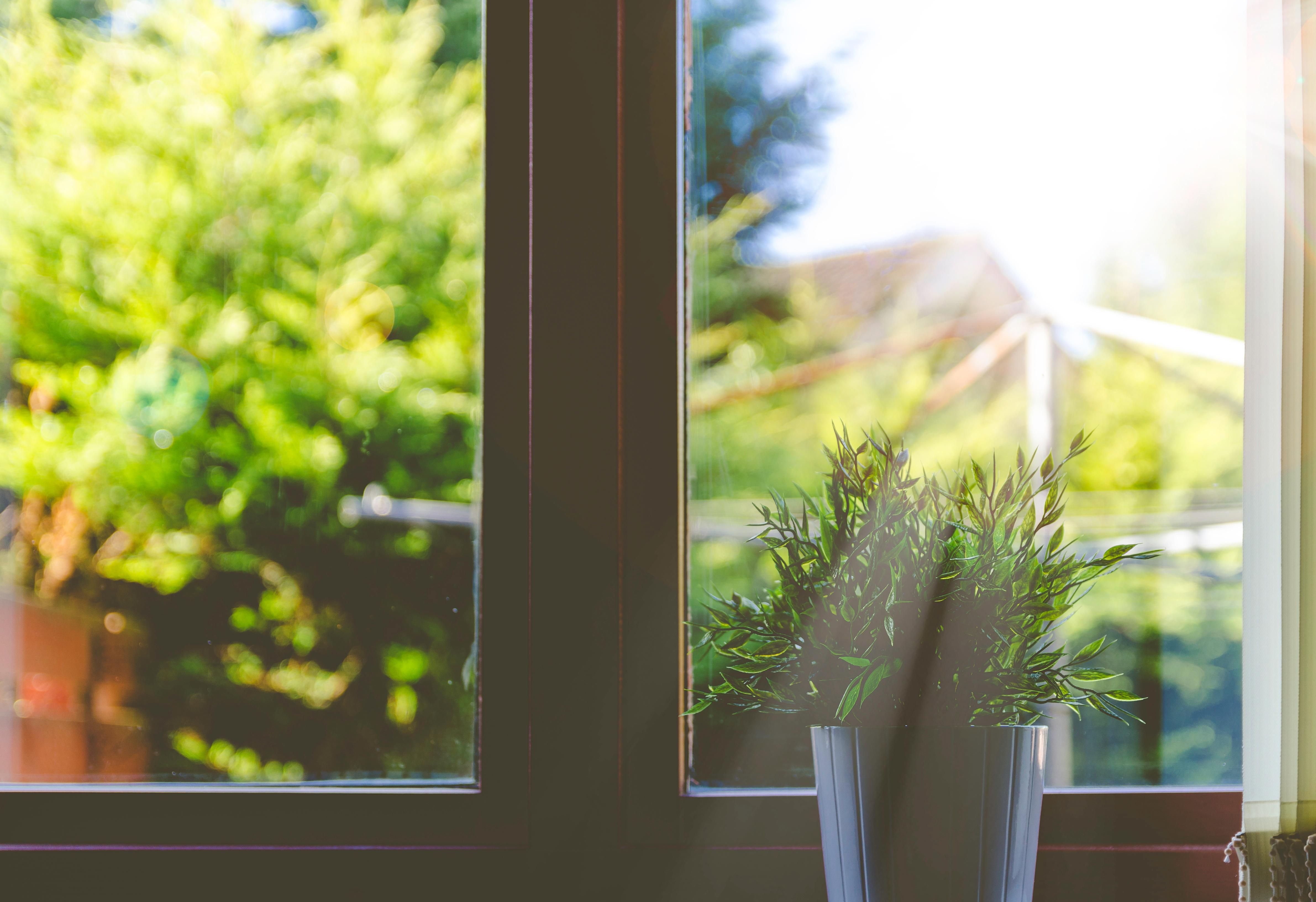 Fotos Gratis árbol Césped Rama Planta Casa Hoja Flor Verde