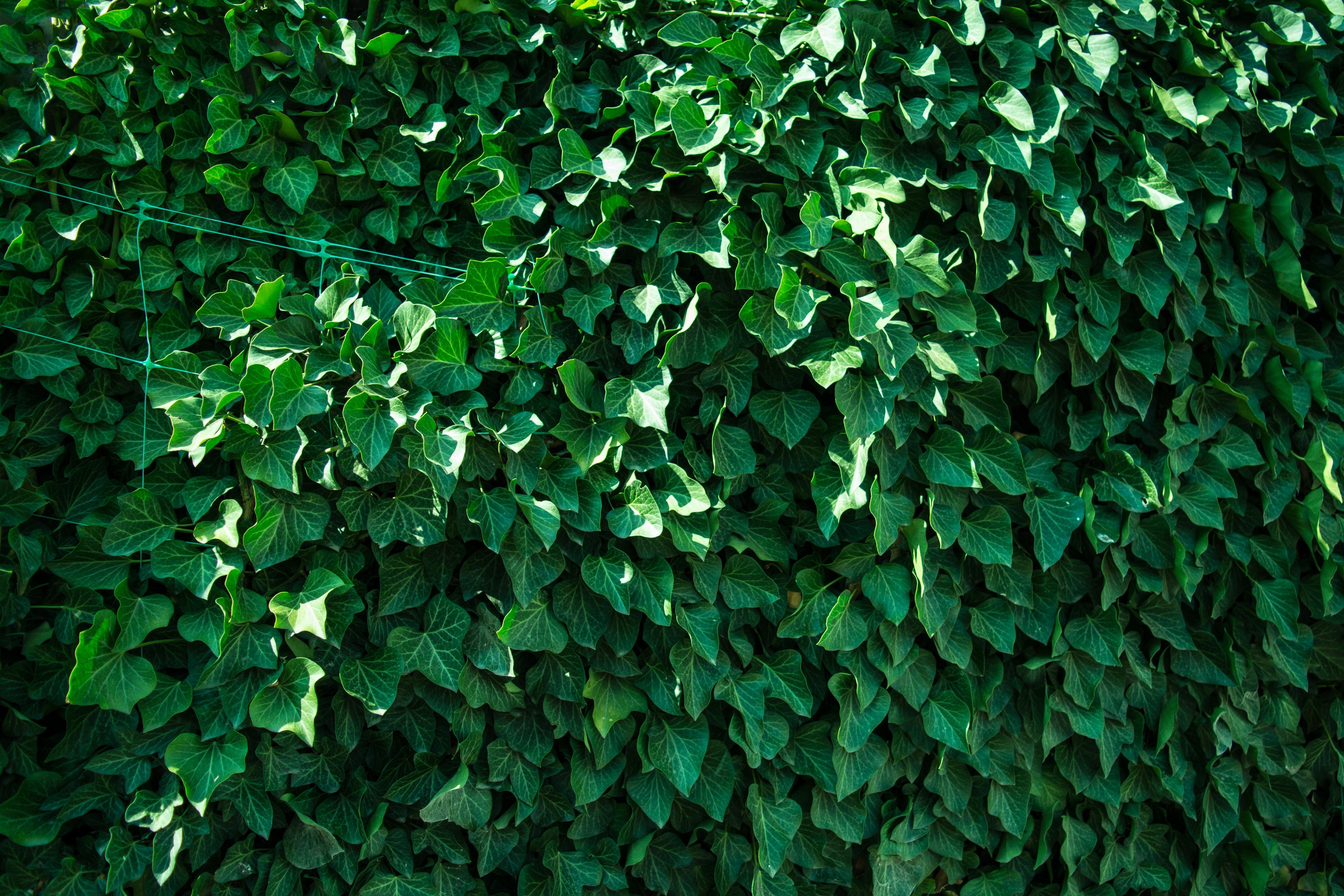 Immagini Belle Albero Erba Ramo Struttura Foglia Fiore Verde