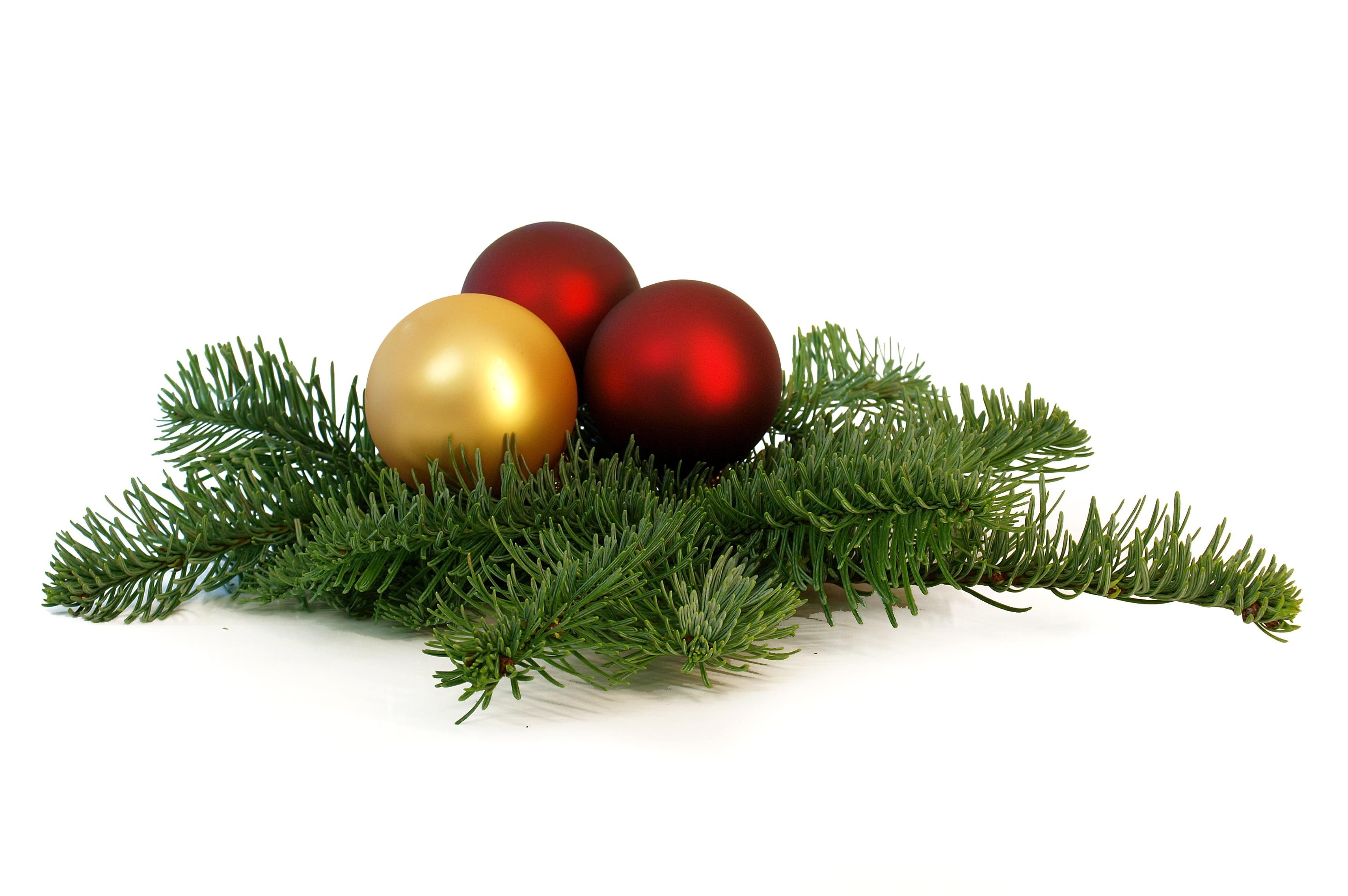 tree grass branch red christmas fir christmas tree twig christmas ornament christmas decoration spruce gold balls - Christmas Decoration Images Free