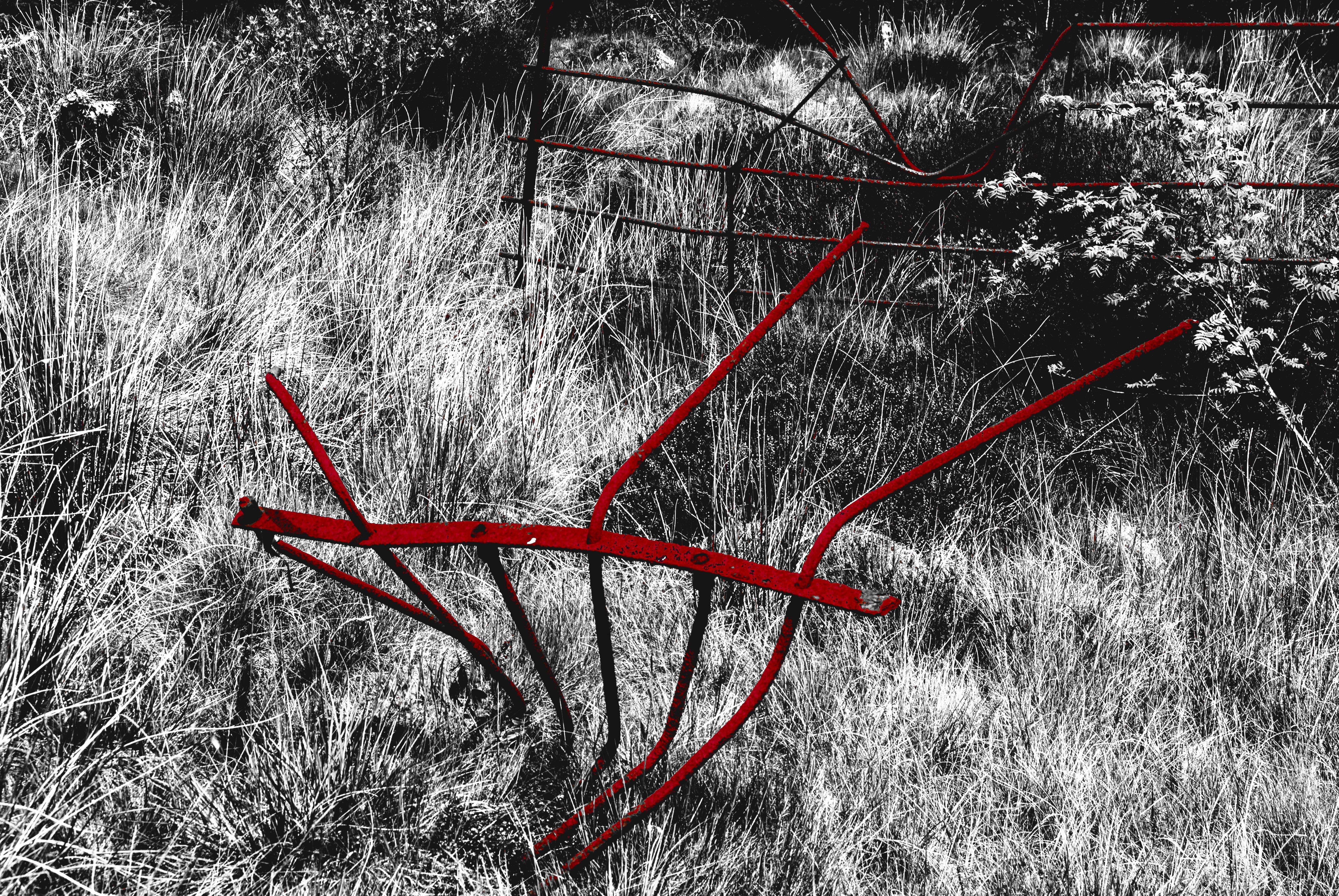 Kostenlose Foto Baum Gras Ast Schnee Winter Zaun Schwarz Und