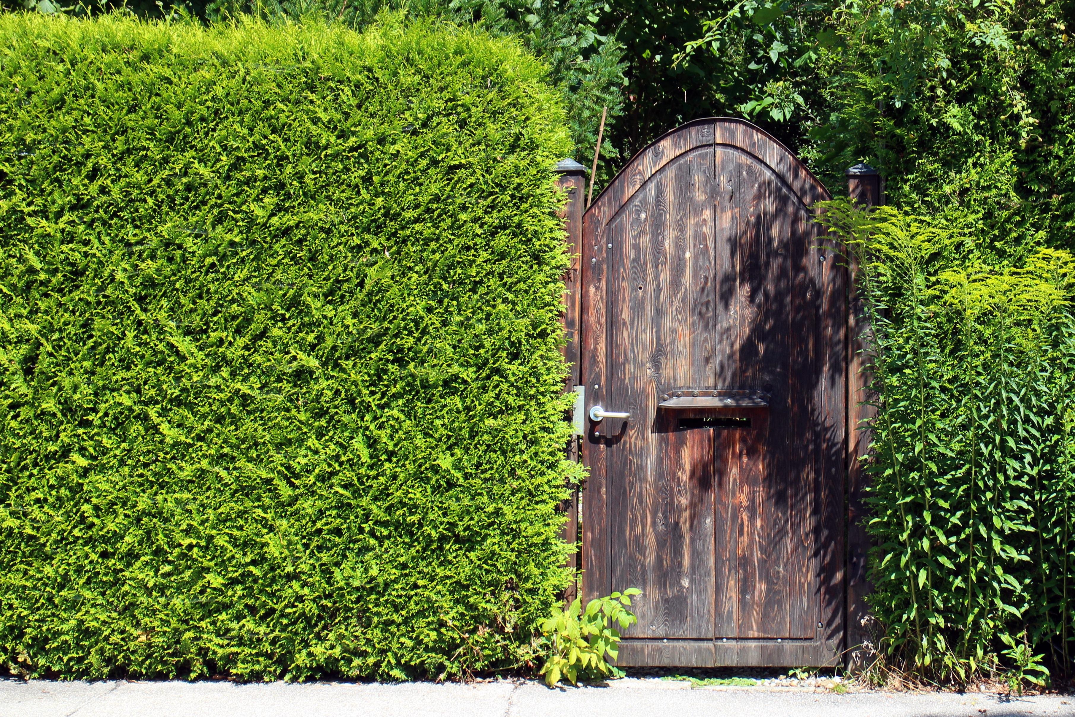 Images gratuites arbre herbe cl ture plante pelouse vert objectif porte en bois - Quand planter de la pelouse ...