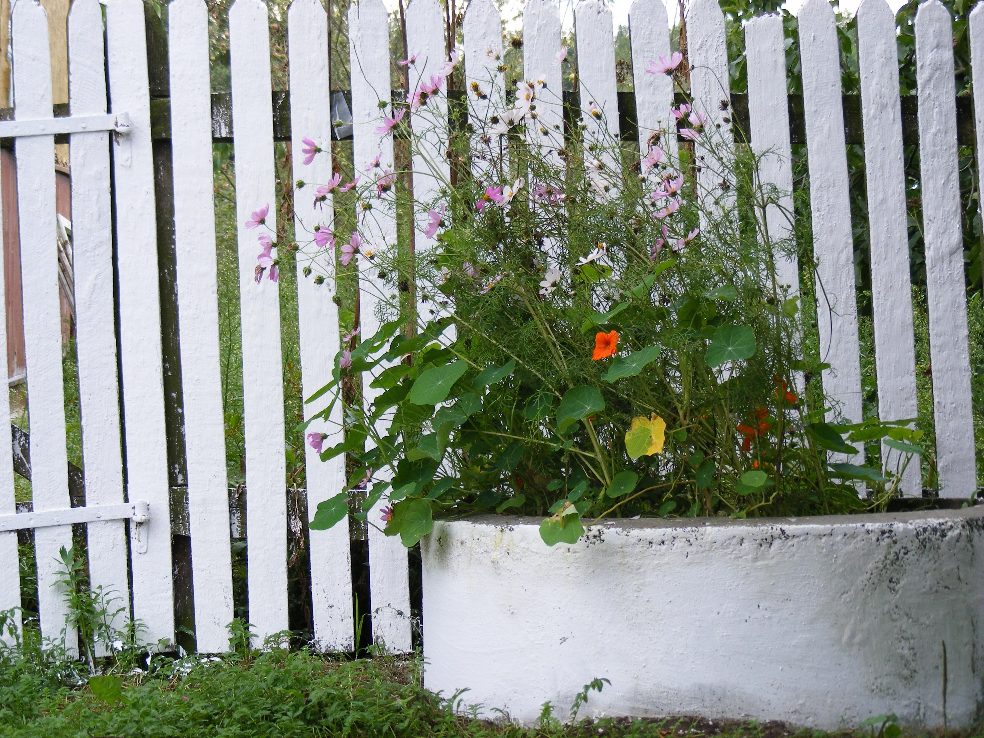 Gambar Pohon Menanam Putih Halaman Rumput Bunga Dinding Hijau Birch Alam Halaman Belakang Botani Taman Pagar Kayu Flora Beton Lingkaran Bunga Bunga Belukar Iklim Dilukis Polandia Rumah Negara Tanaman Berbunga Kayu Tanaman