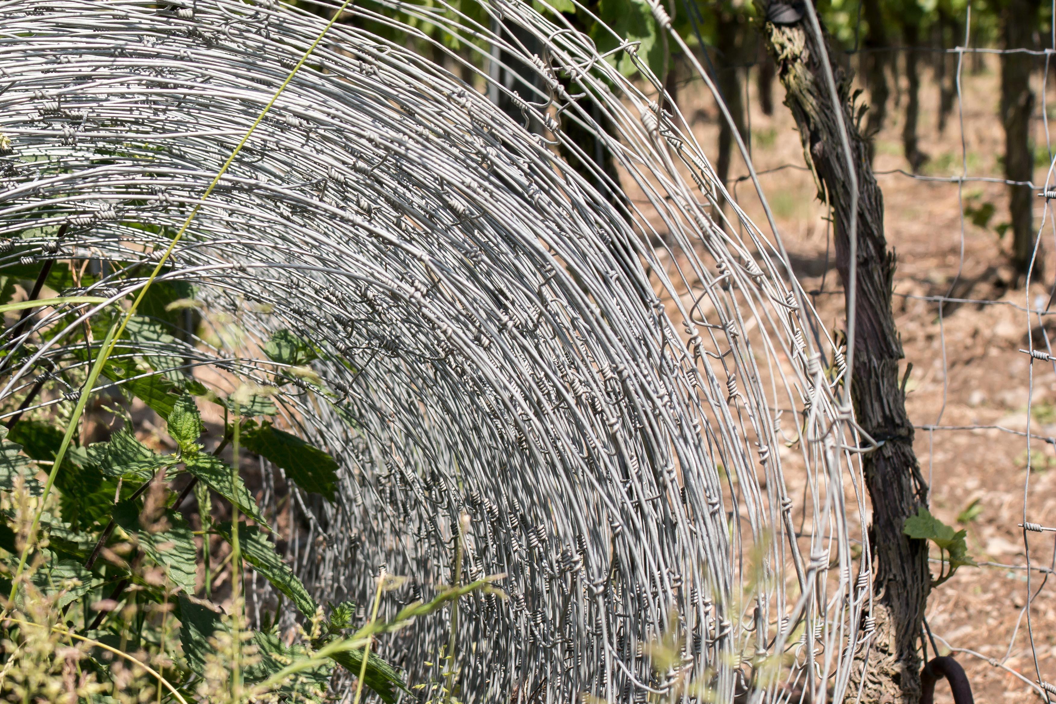 Kostenlose Foto Baum Gras Zaun Holz Wein Blatt Blume
