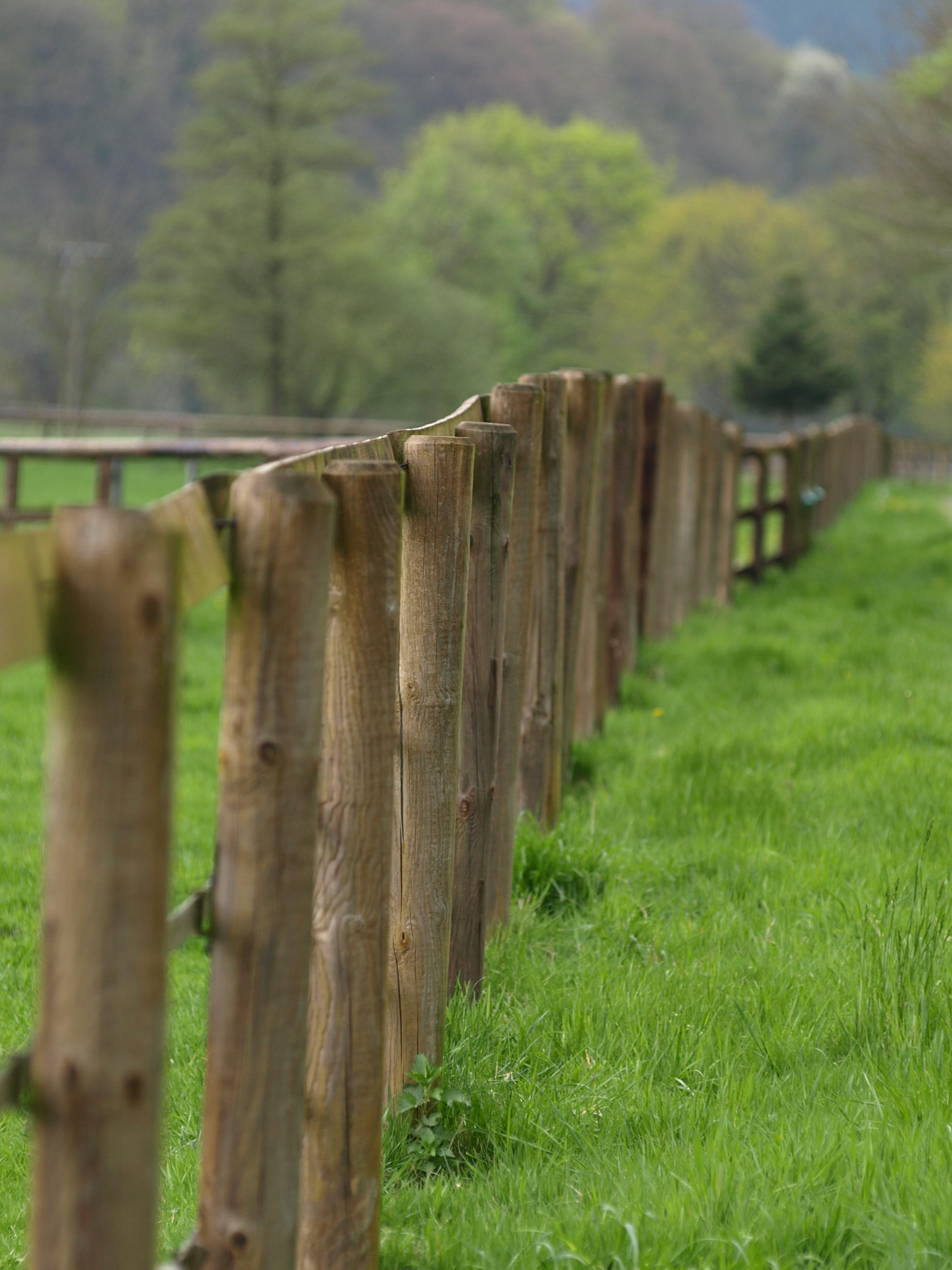 Kostenlose foto Baum Gras Holz Rasen Mauer Gehweg Weide