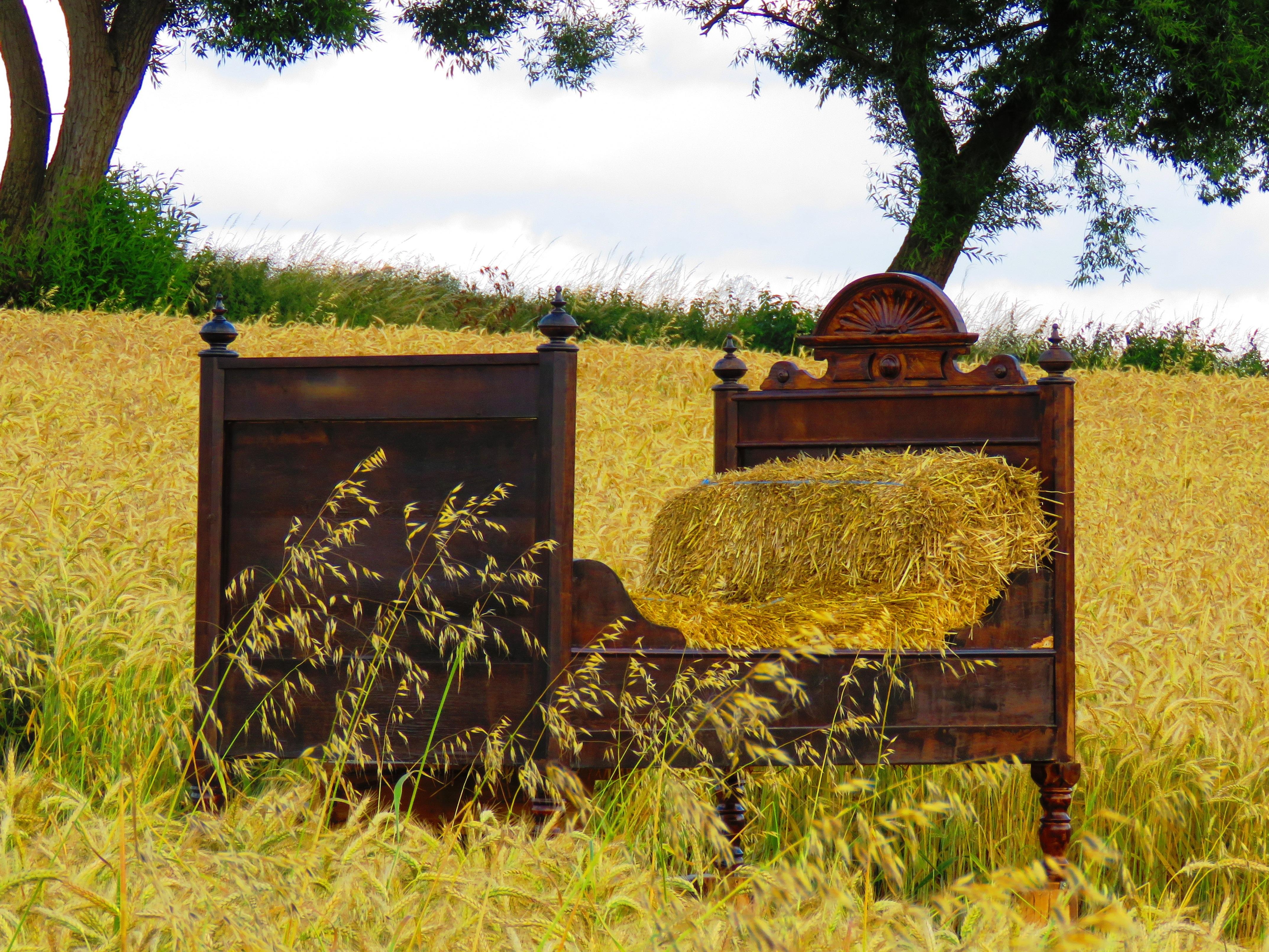 图片素材: 树, 领域, 农场, 草地, 草原, 花, 棚屋, 秋季, 舒适, 农业