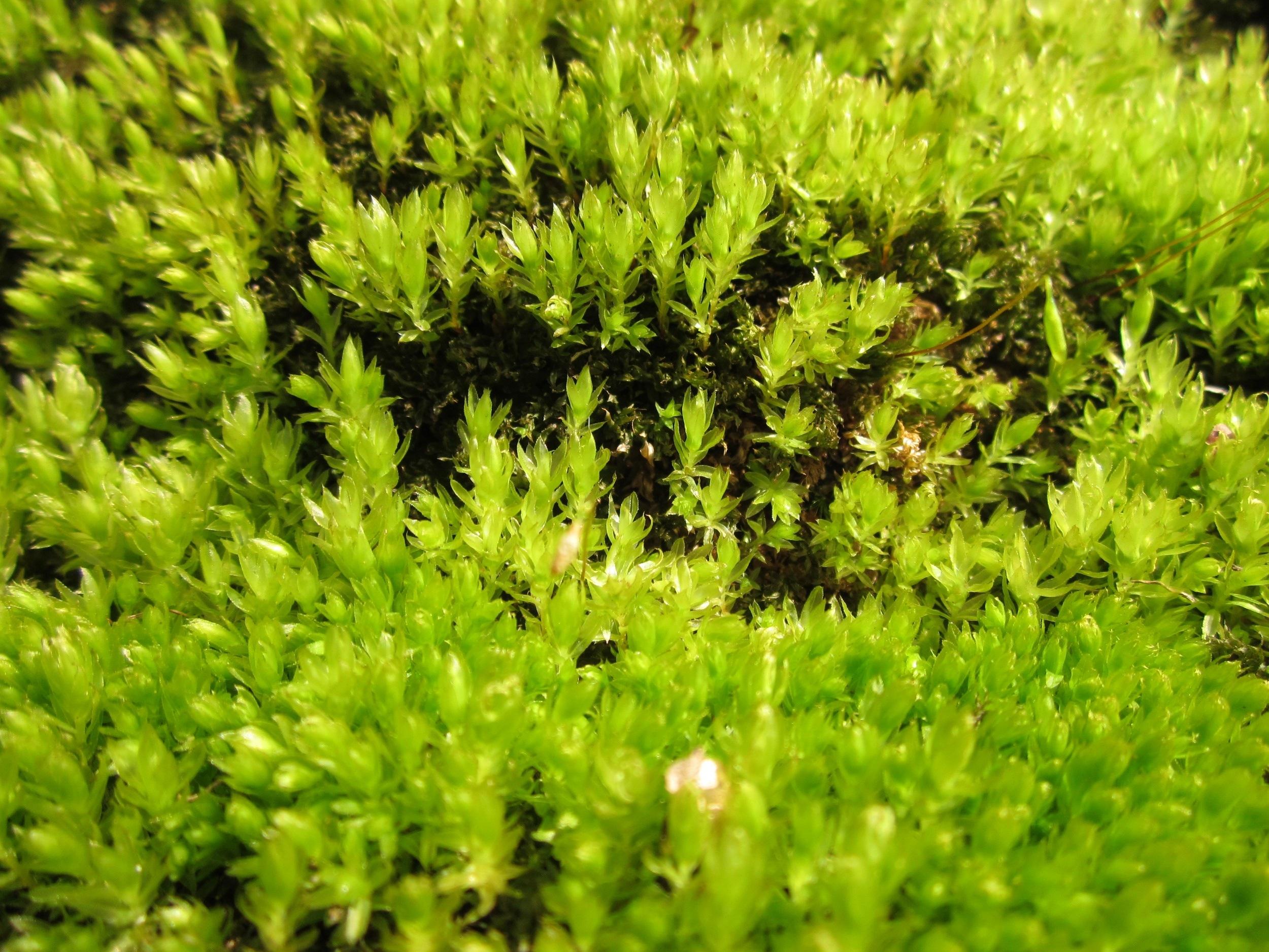 Images gratuites arbre herbe croissance pelouse for Plante arbuste