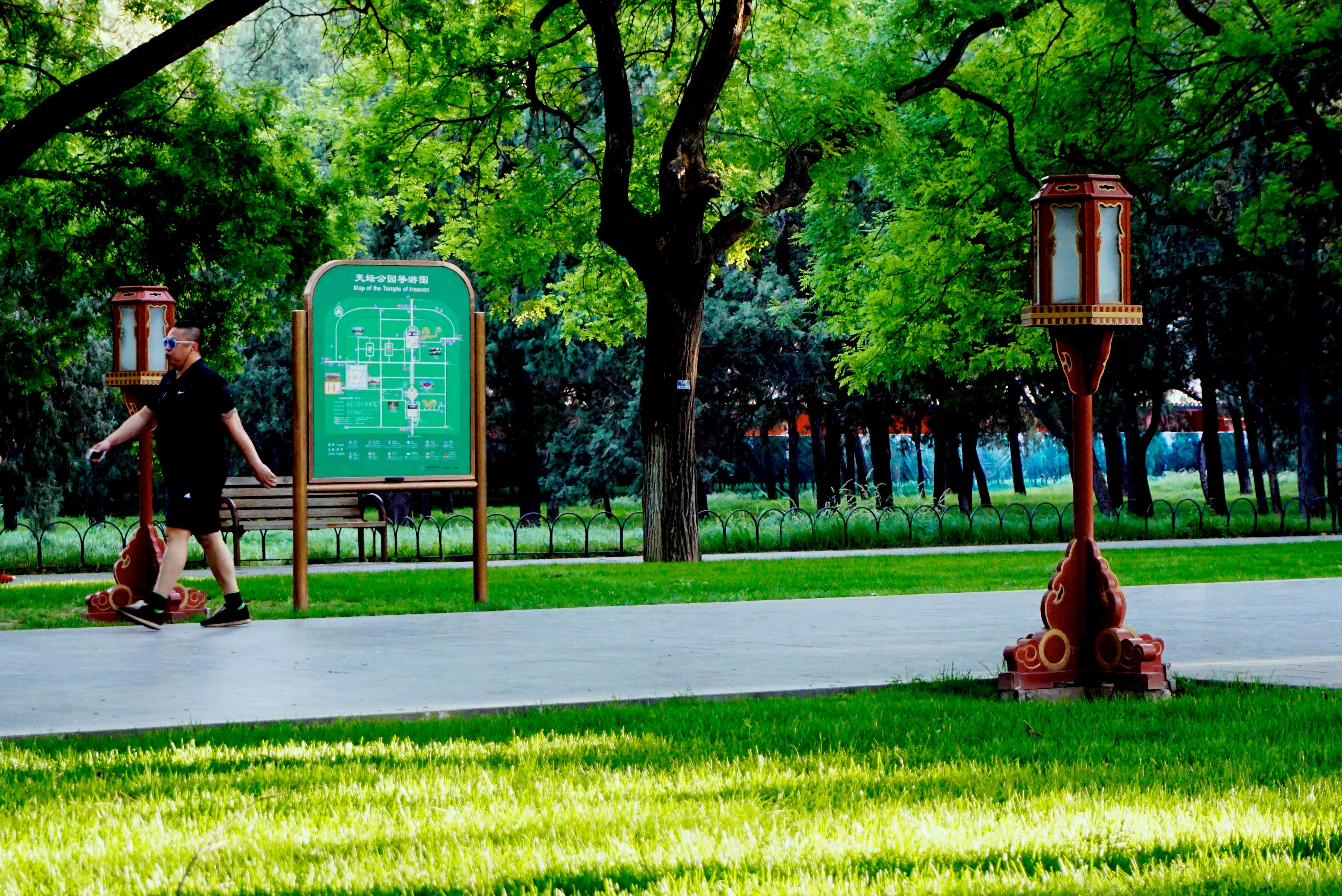 Gratuites arbre herbe pelouse ville des loisirs vert