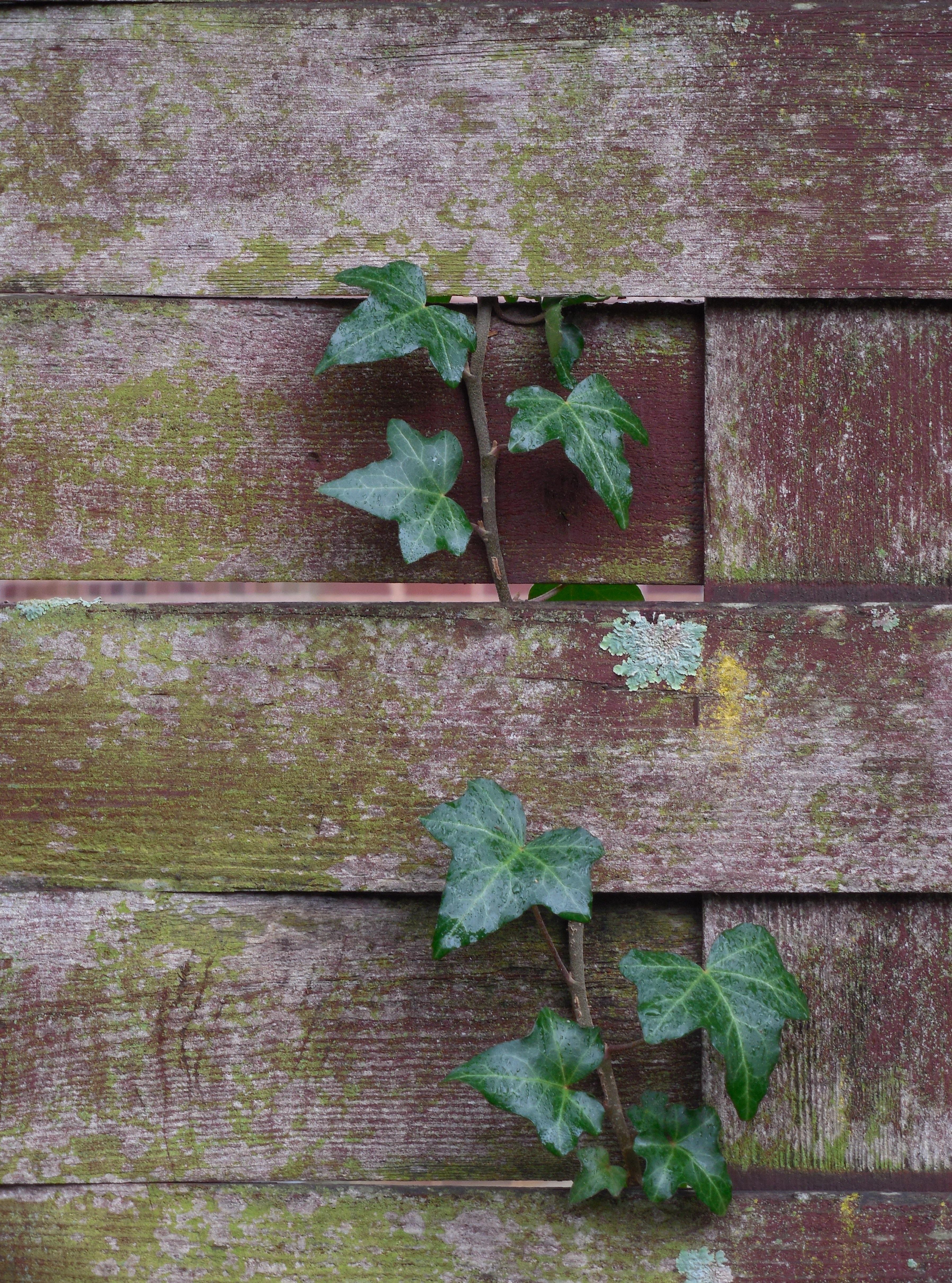 무료 이미지 : 나무, 잔디, 집 밖의, 판, 목재, 포도 수확 ...