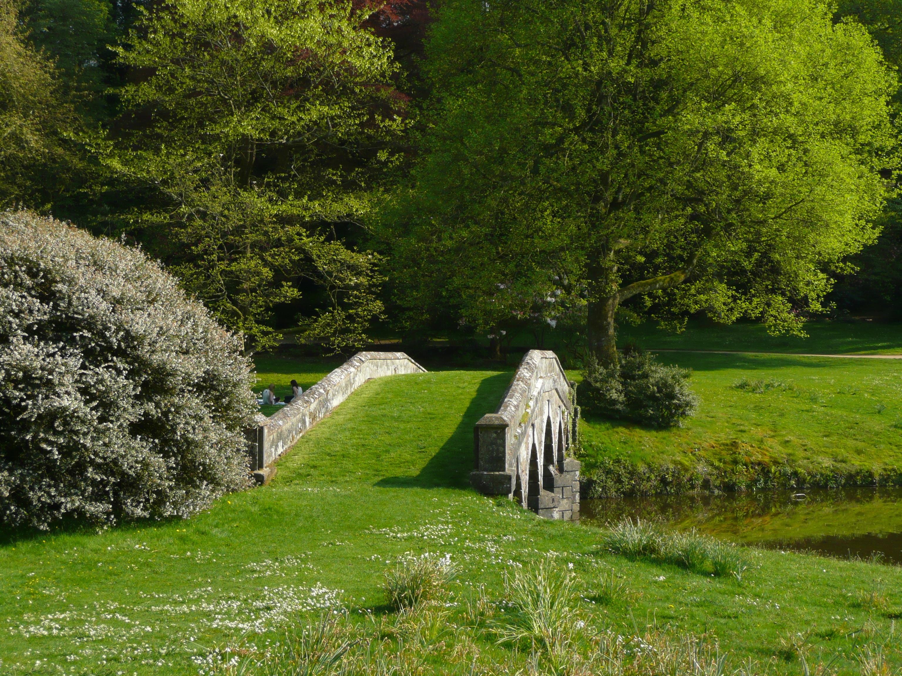 free images tree grass bridge lawn meadow flower green