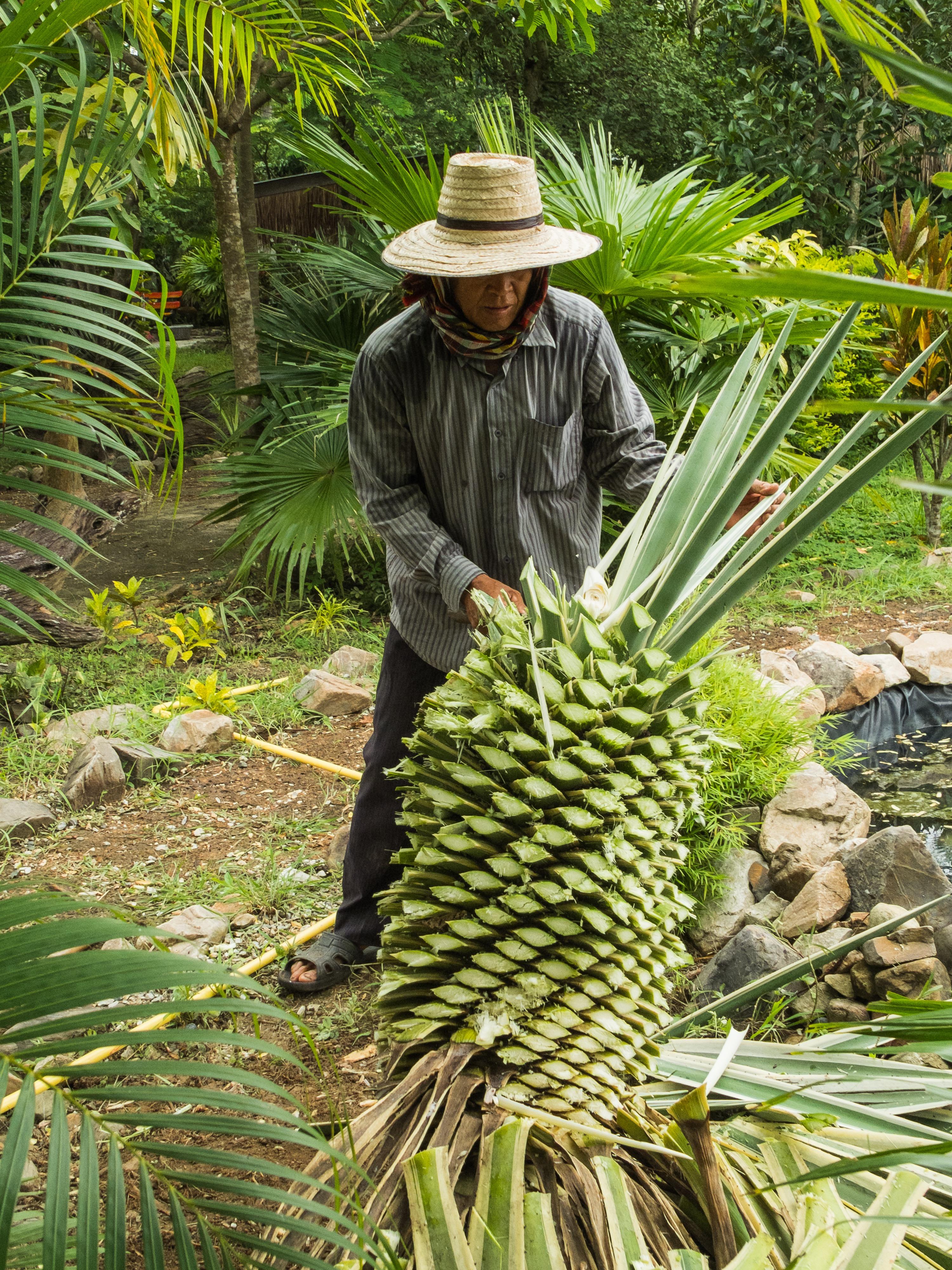 Fotos gratis rbol c sped planta cultivo agricultura - Arbol de pina ...