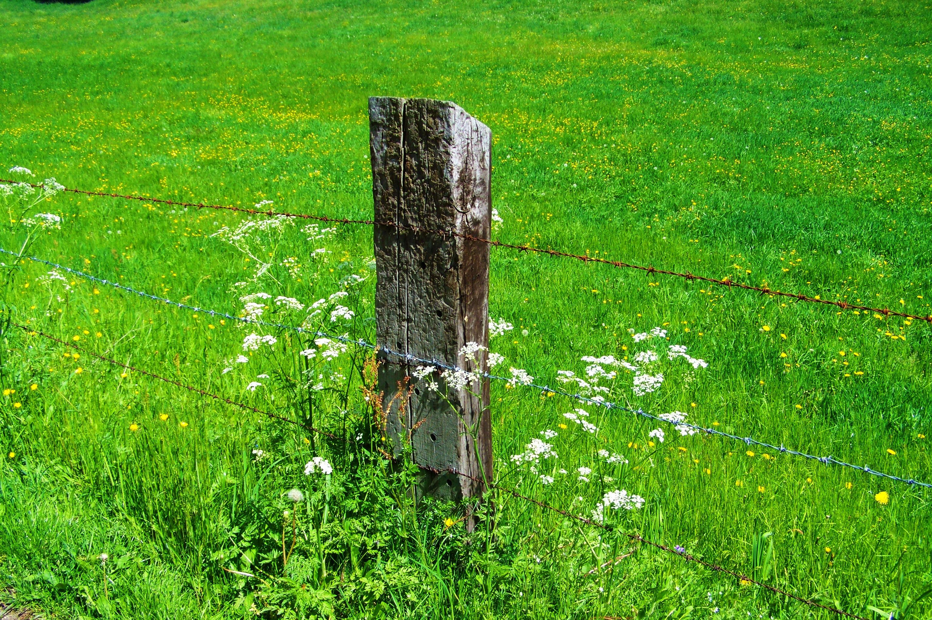 Kostenlose foto Baum Gras Pflanze Feld Rasen Wiese Blume