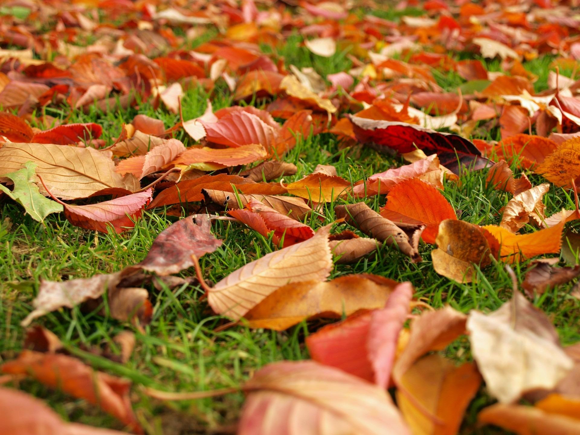 недуга картинки земля покрытая осенними листьями этой целью рубин