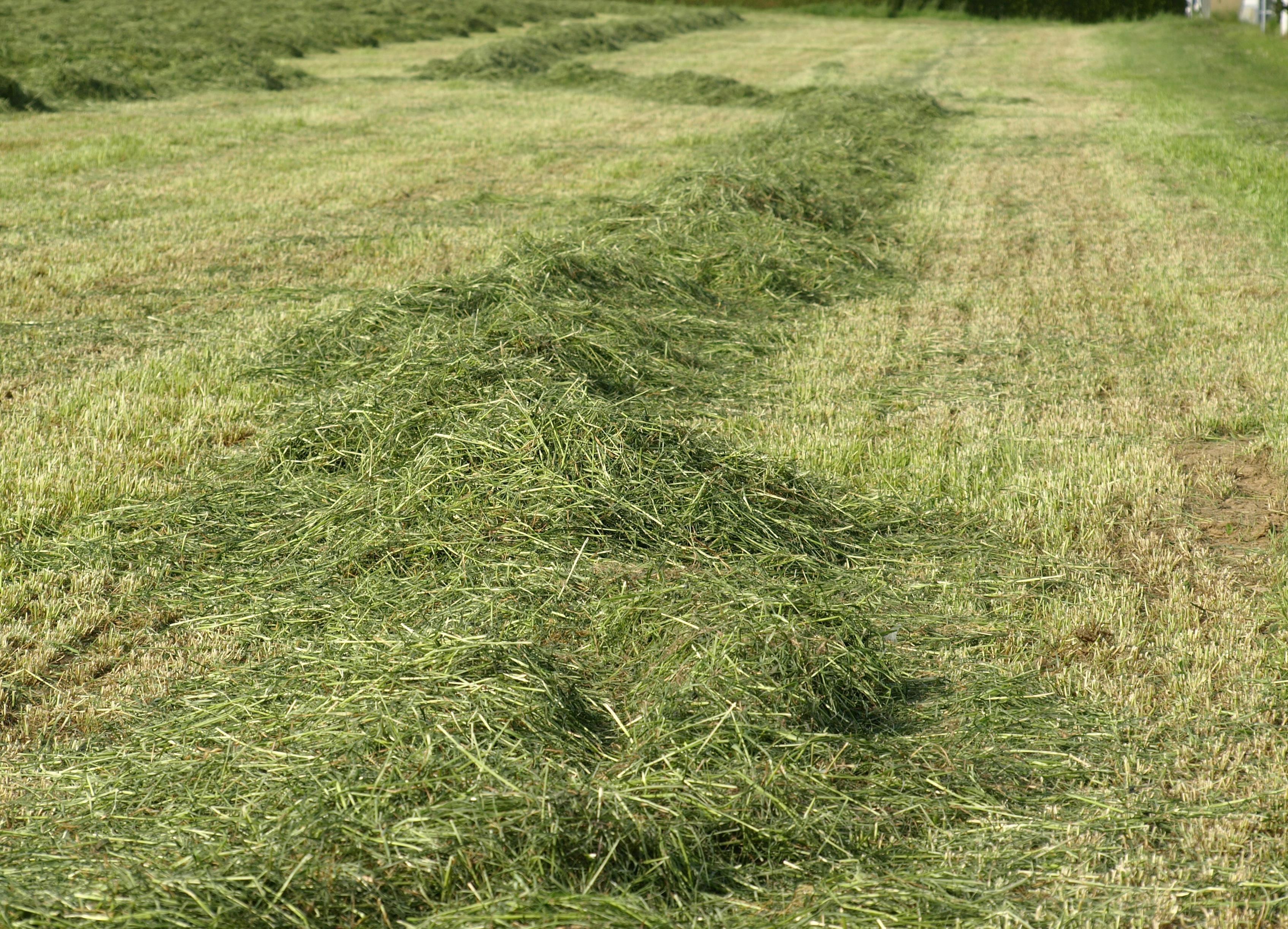 трава скошена картинка обязательно выдерживать