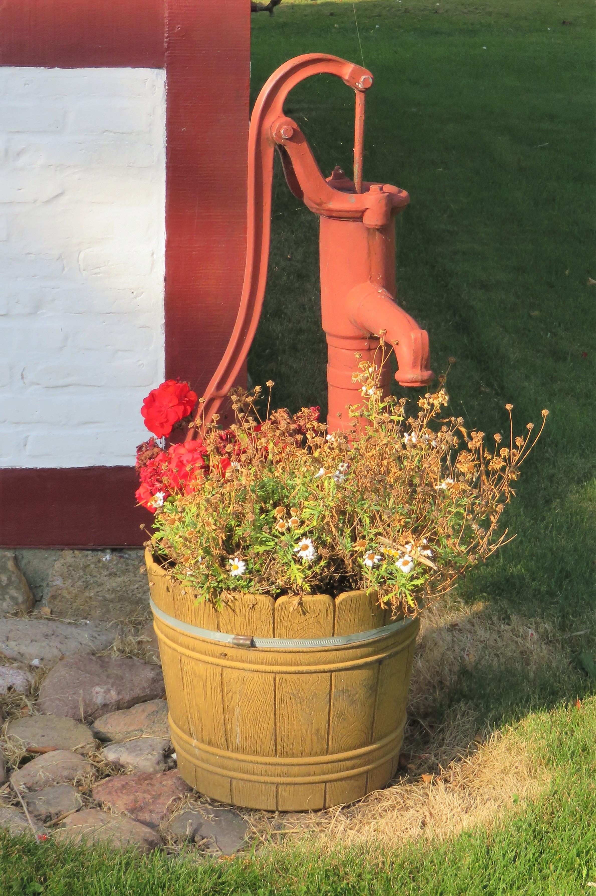 free images : tree, grass, plant, lawn, flower, backyard, botany