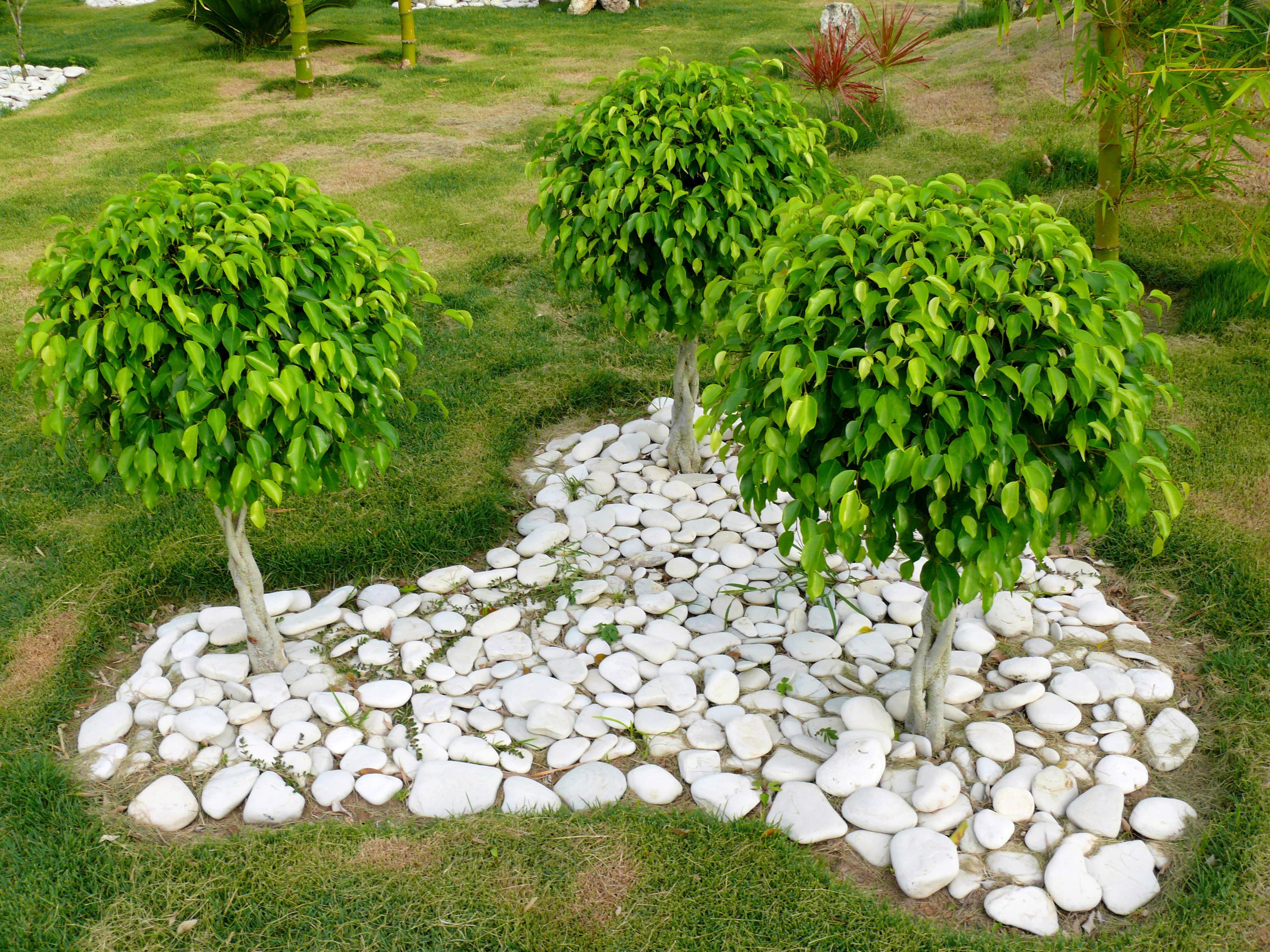 Images gratuites arbre herbe plante pelouse fleur for Plante ligneuse