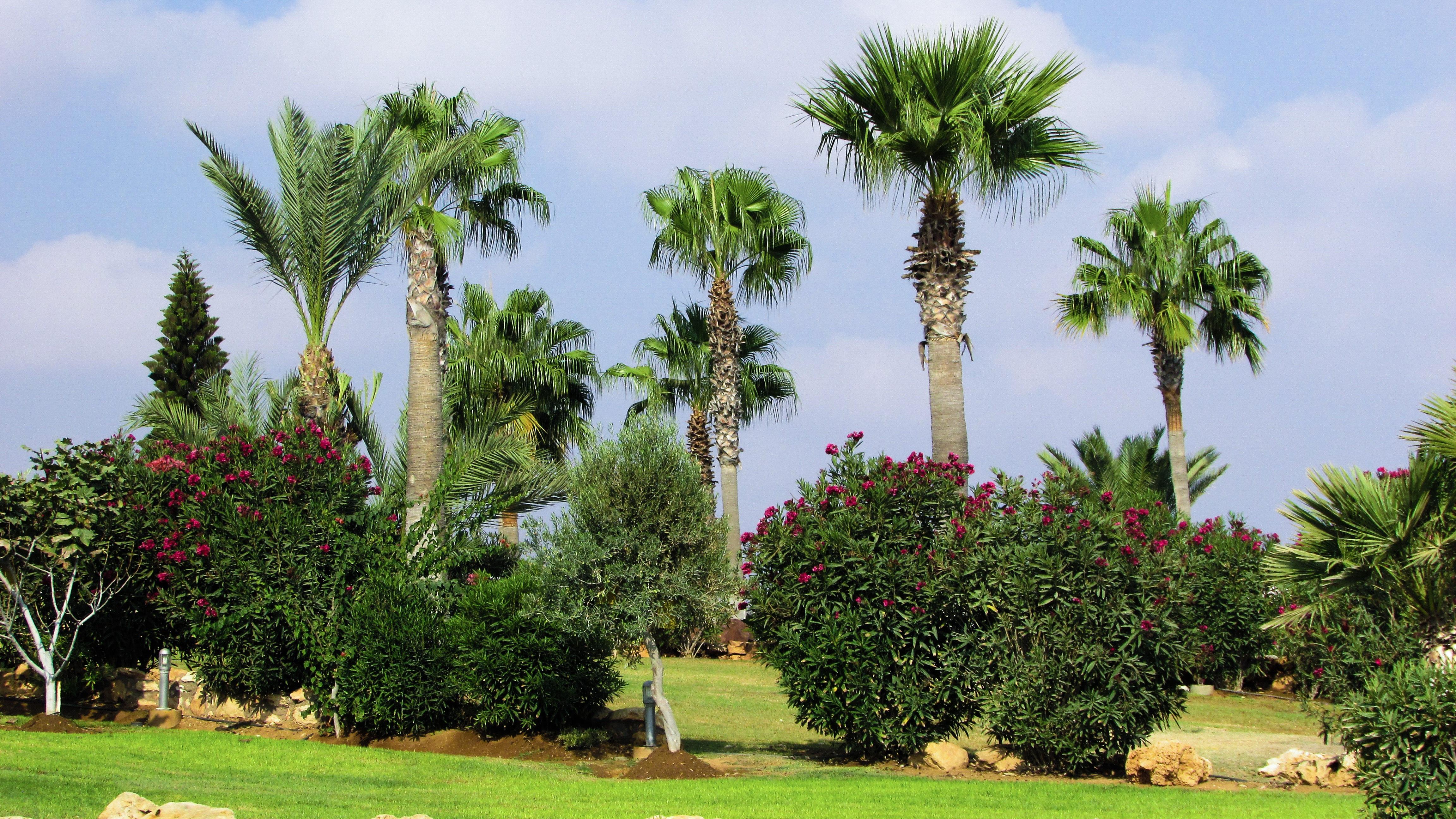 Fotos gratis rbol c sped planta flor verde for Arboles jardin botanico