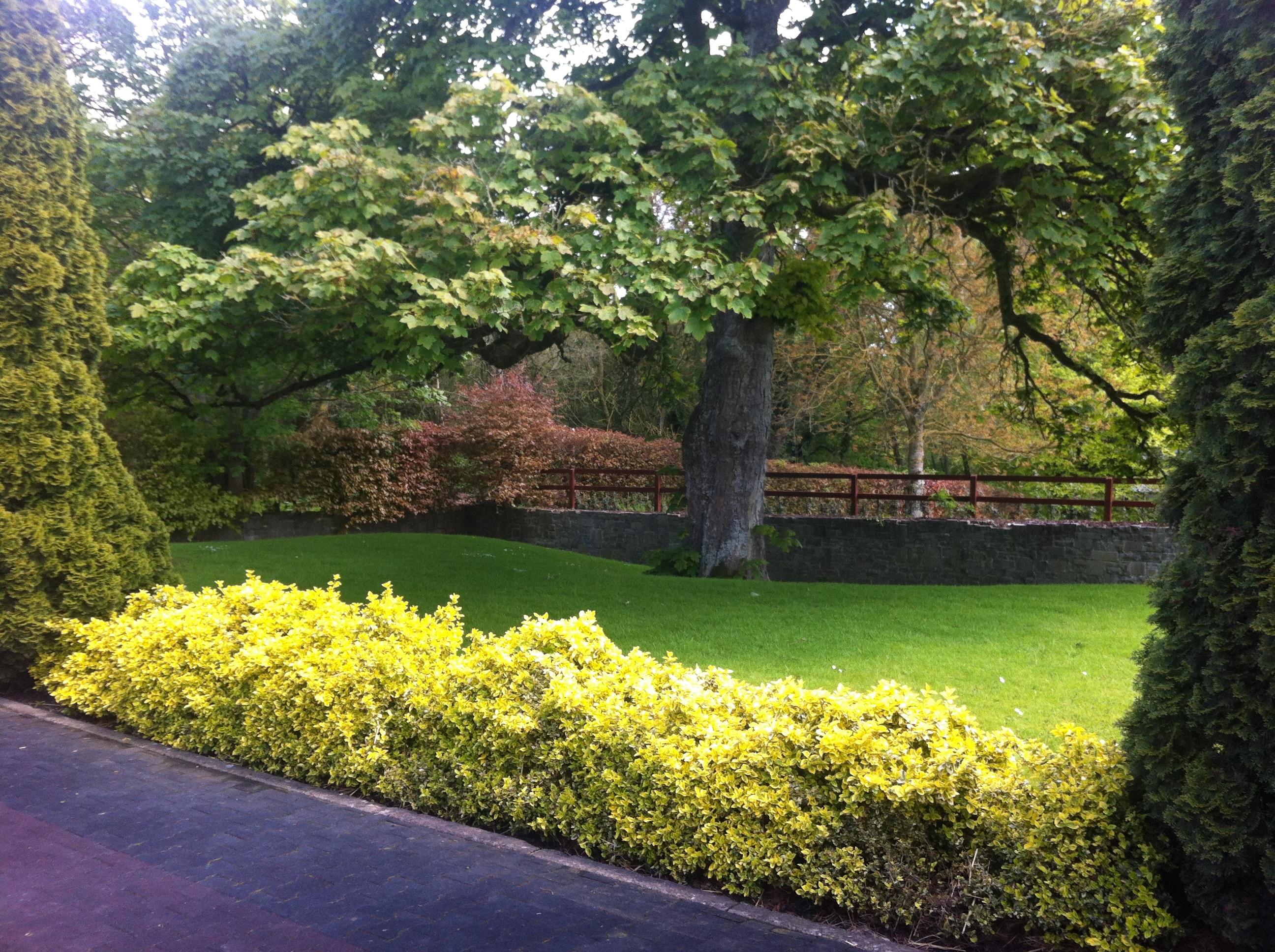 Images gratuites arbre herbe plante pelouse feuille for Plante haute