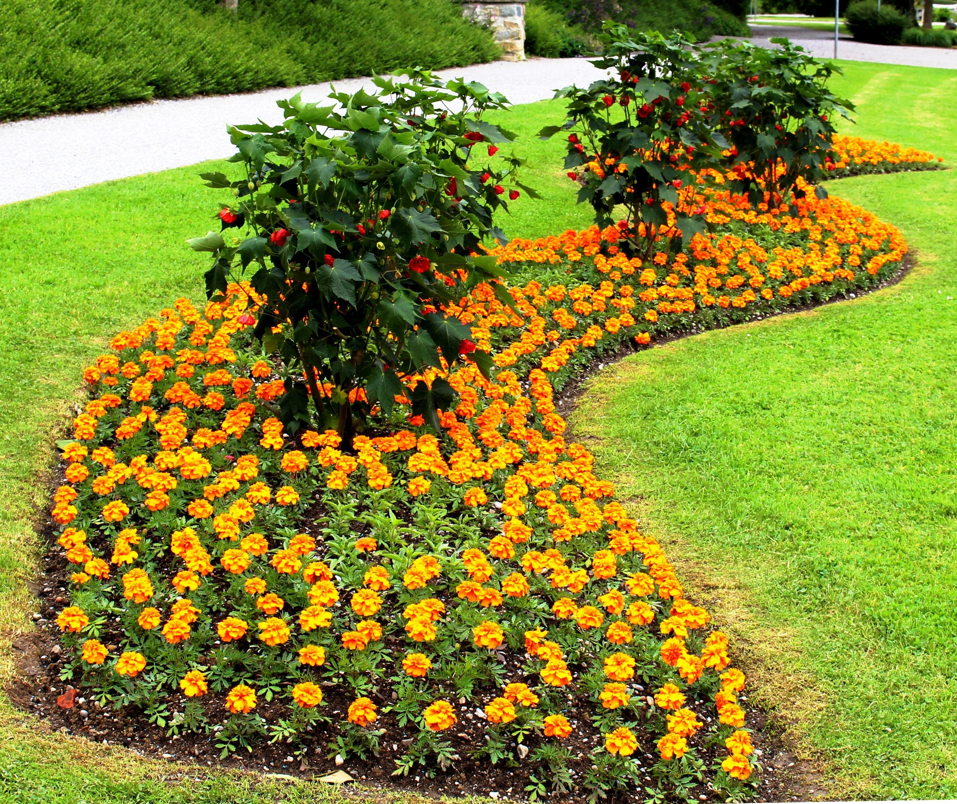 картинки цветочная рабатка лыткаринскому