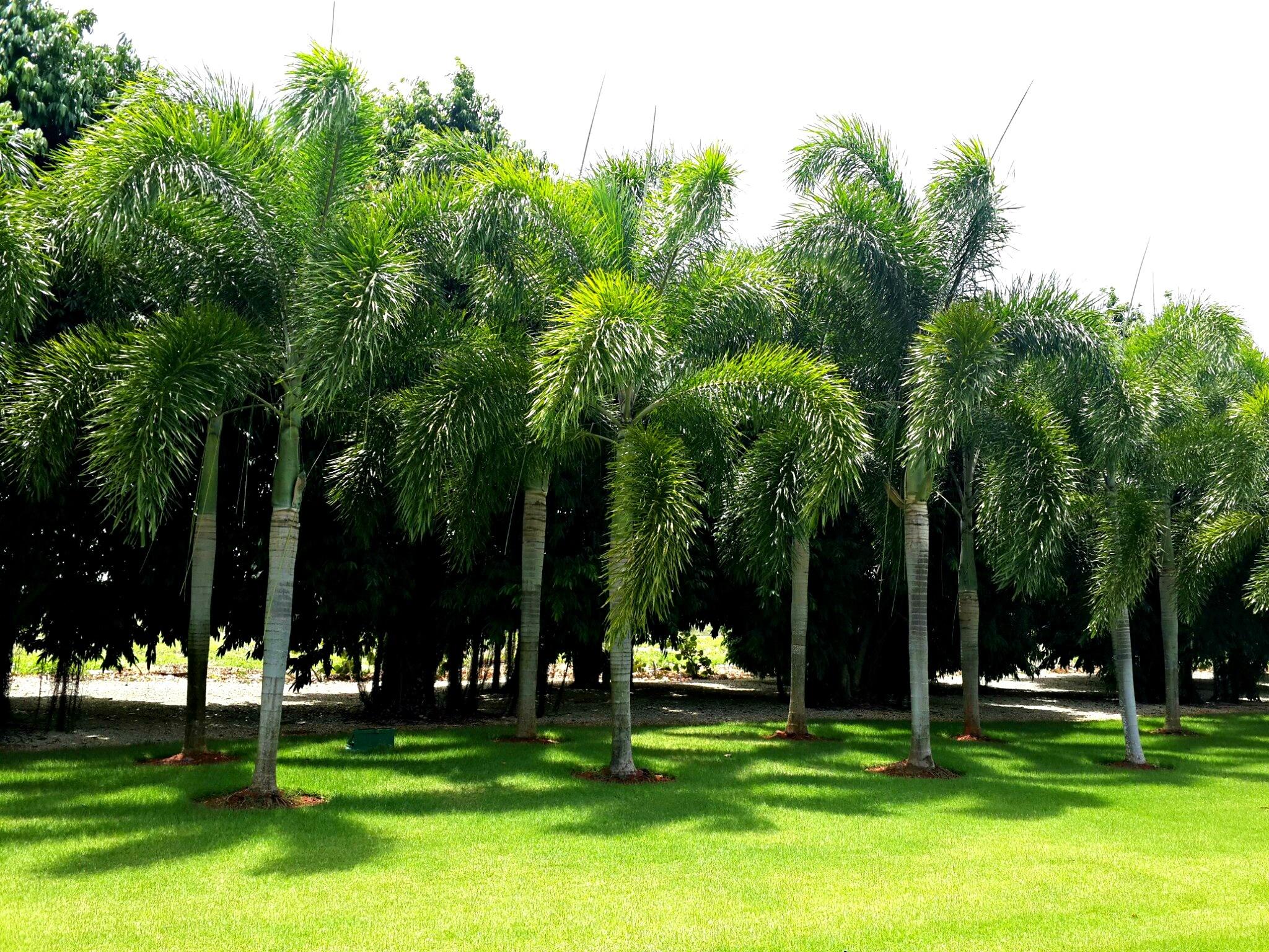Fotos gratis rbol c sped planta parque bot nica for Arboles jardin botanico