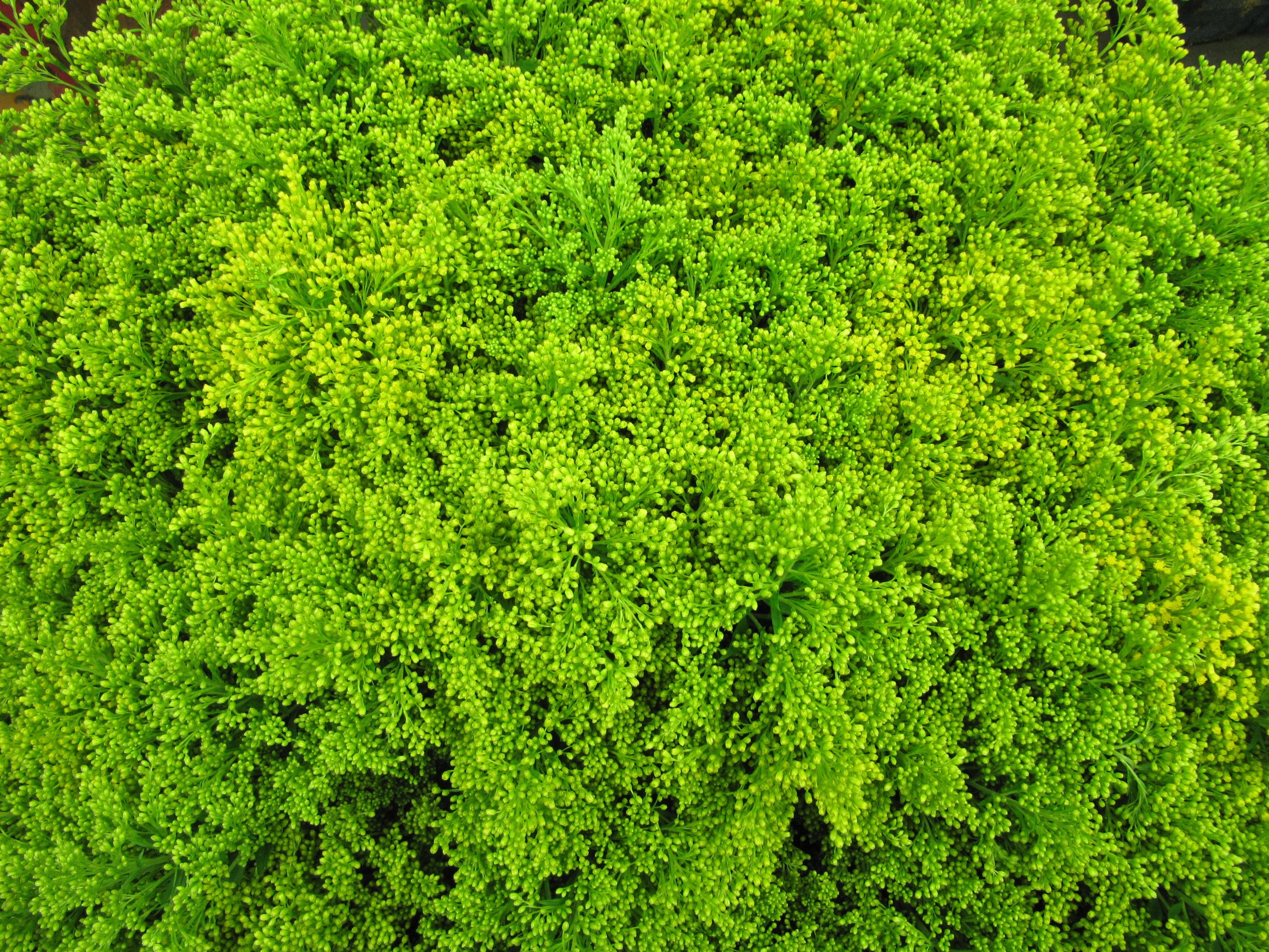 Fotos gratis rbol c sped hoja flor musgo floral for Vegetacion ornamental