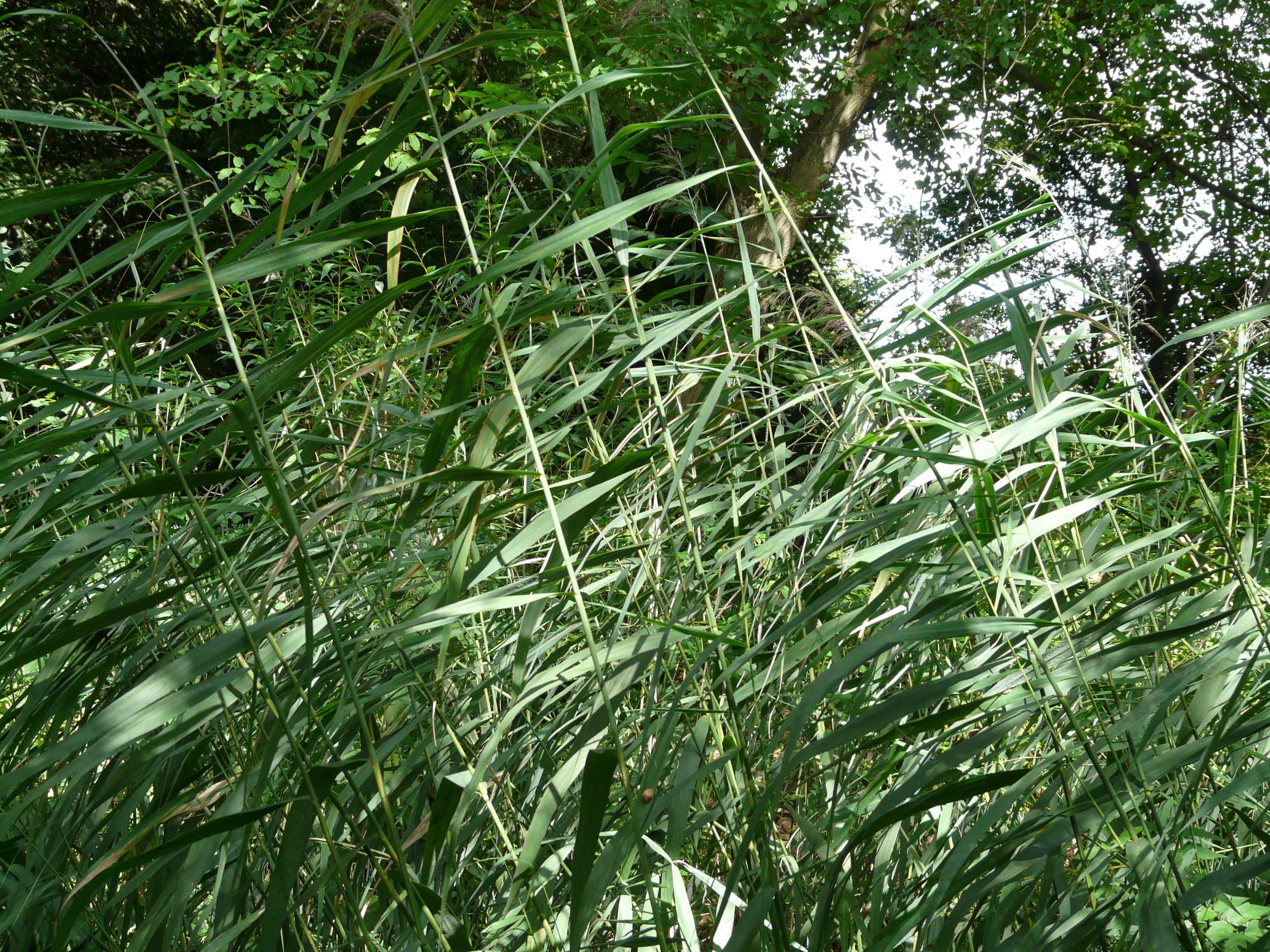 Gratis afbeeldingen : boom fabriek blad bloem plantkunde