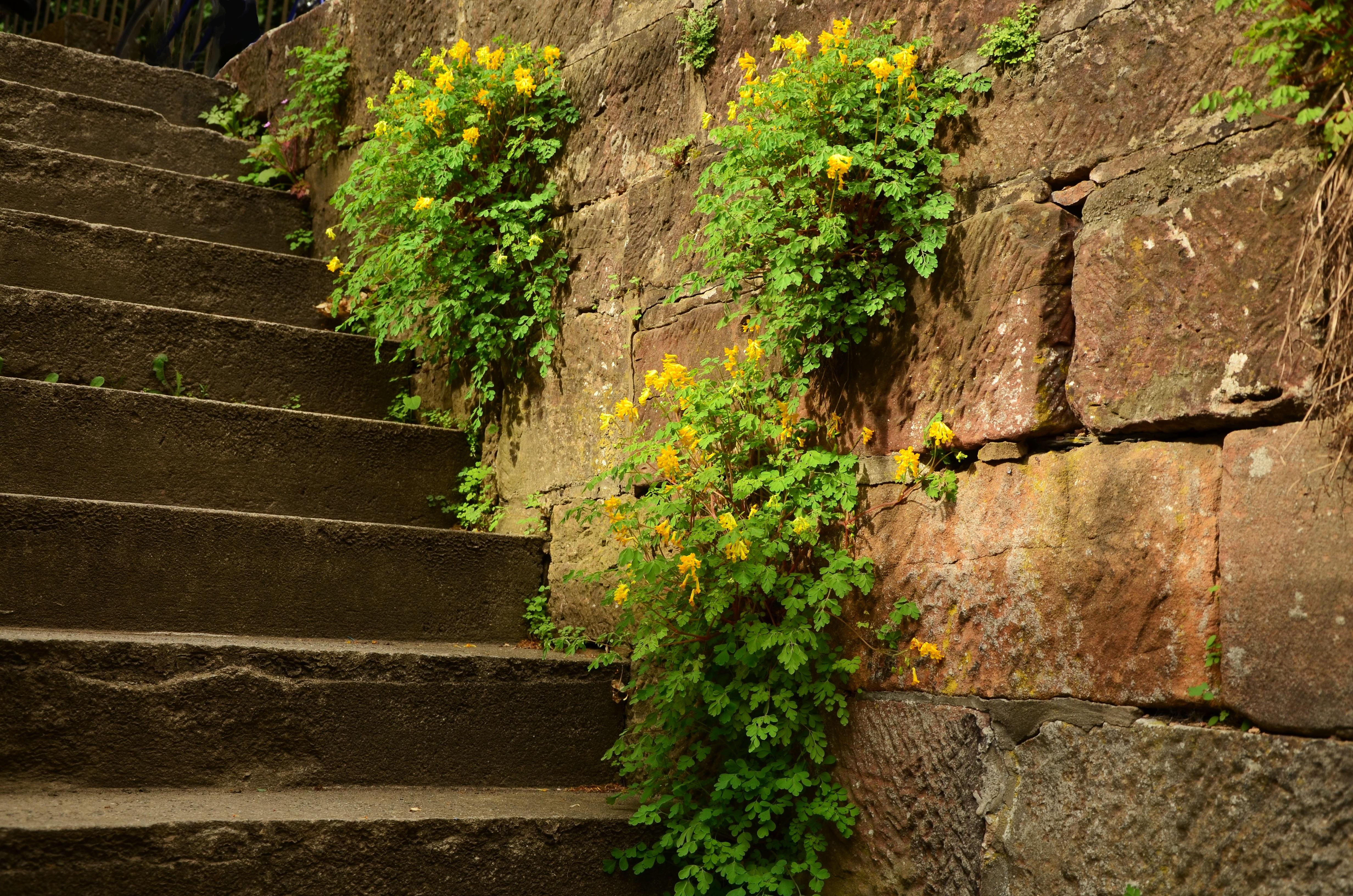 Bakstenen Muur Tuin : Gratis afbeeldingen : boom gras fabriek blad bloem steen