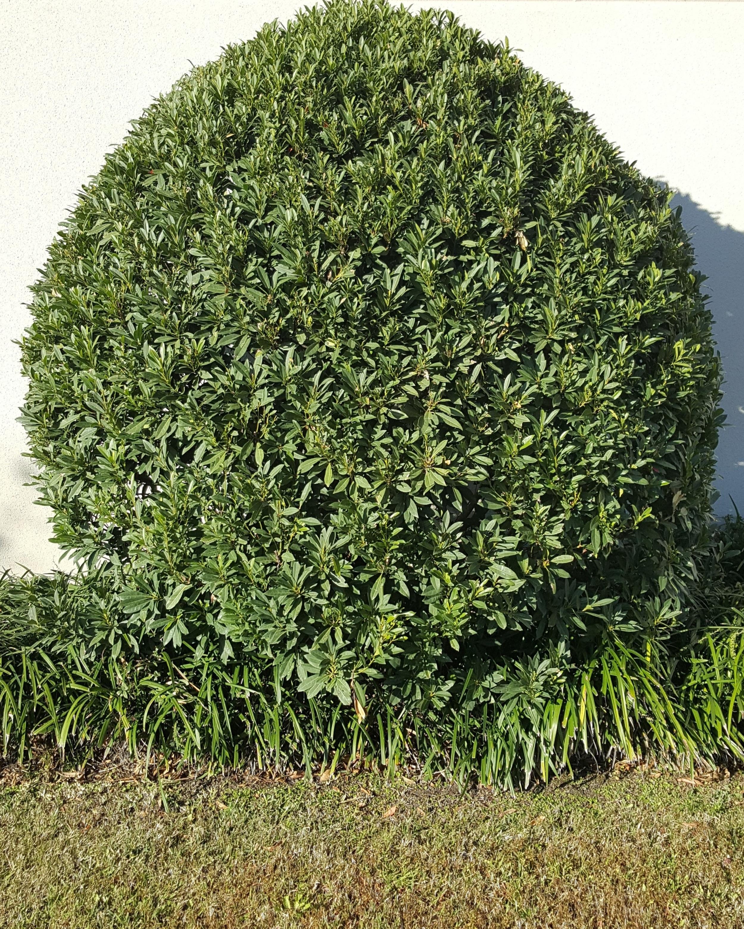 Kostenlose foto Baum Gras Blatt runden Blume Grün
