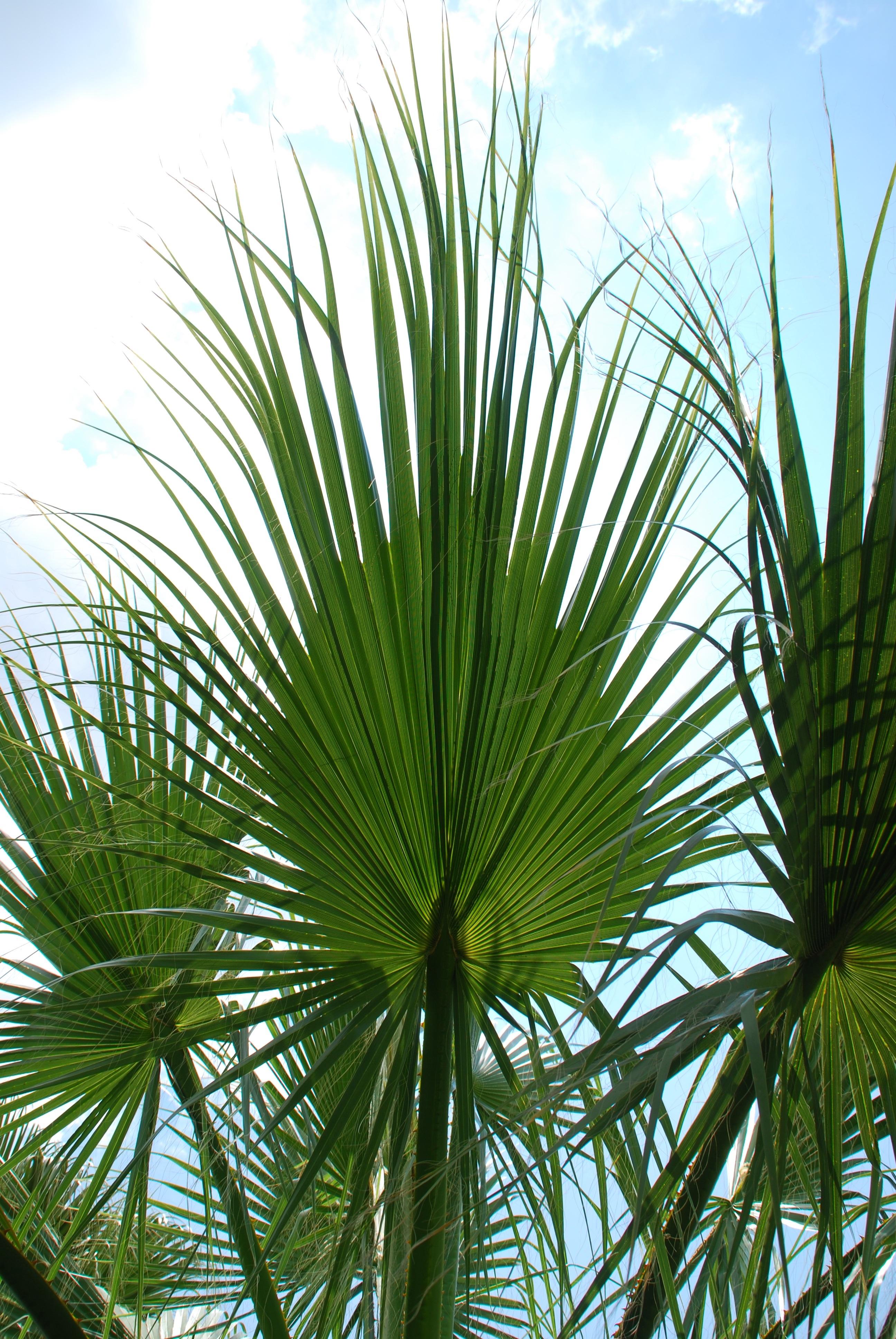 800+ Gambar Daun Tropis HD Terbaru