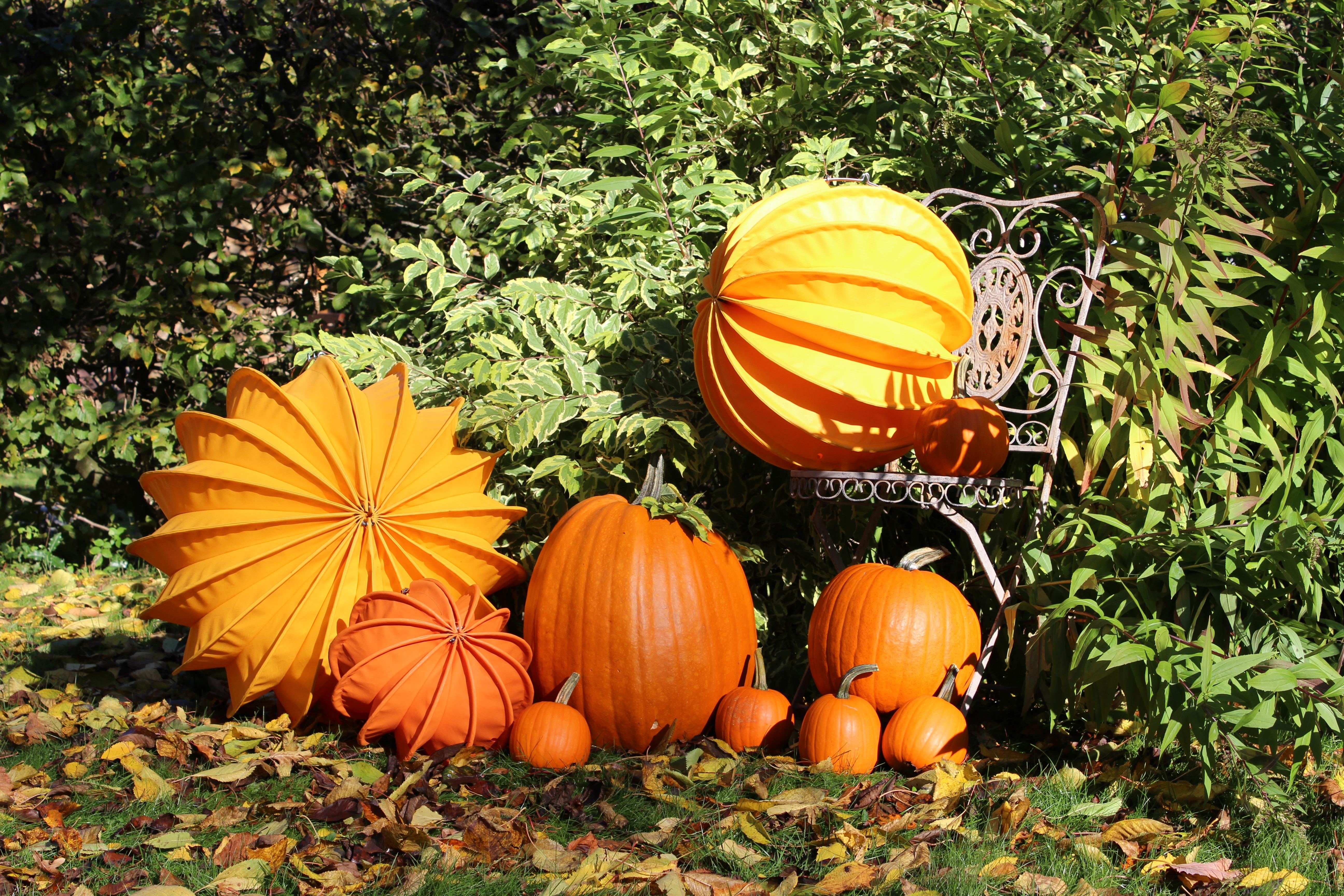 free images tree grass plant fruit leaf orange produce