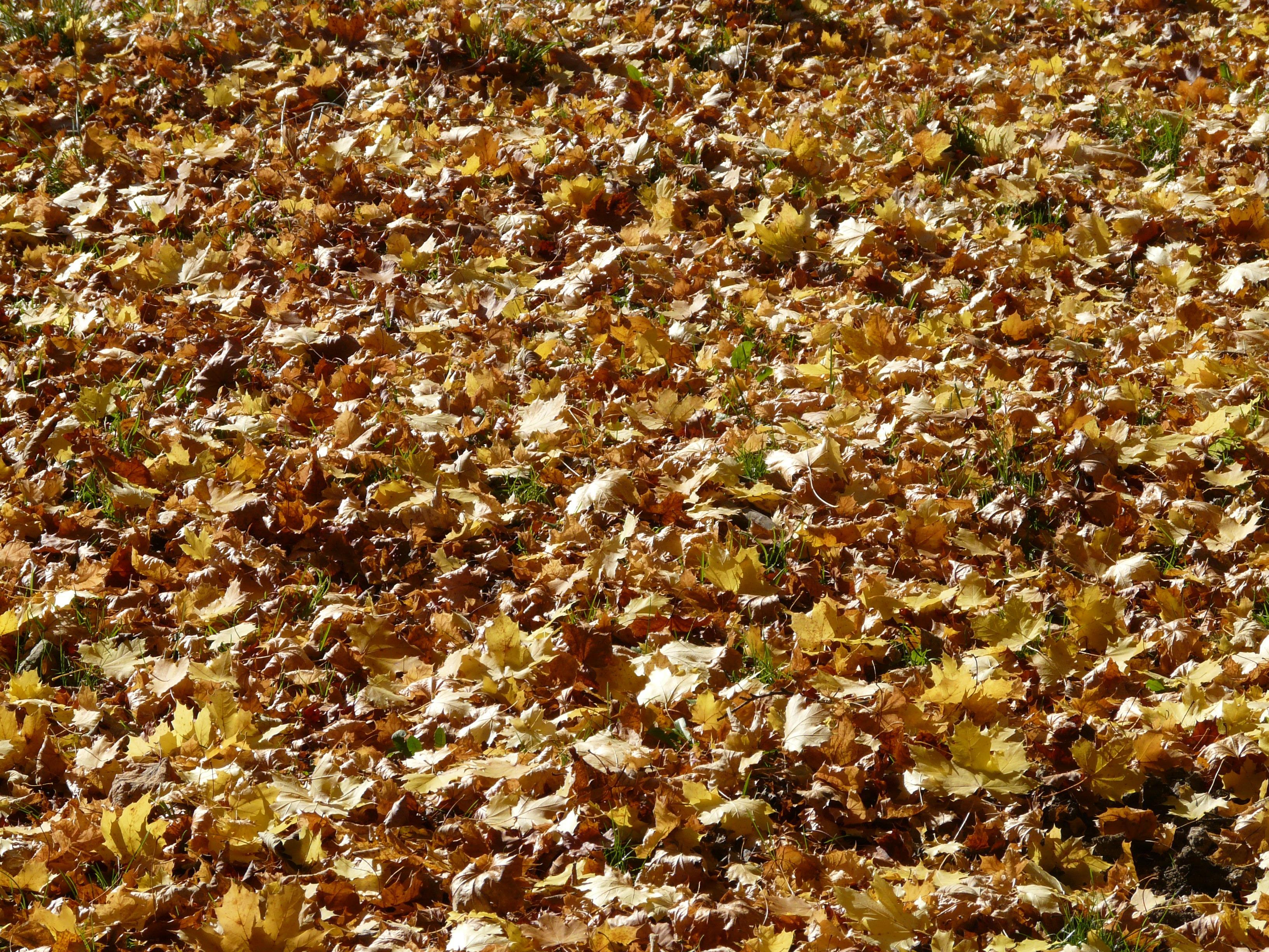 무료 이미지 : 식물, 햇빛, 조직, 꽃, 무늬, 수확고, 흙, 시즌 ...