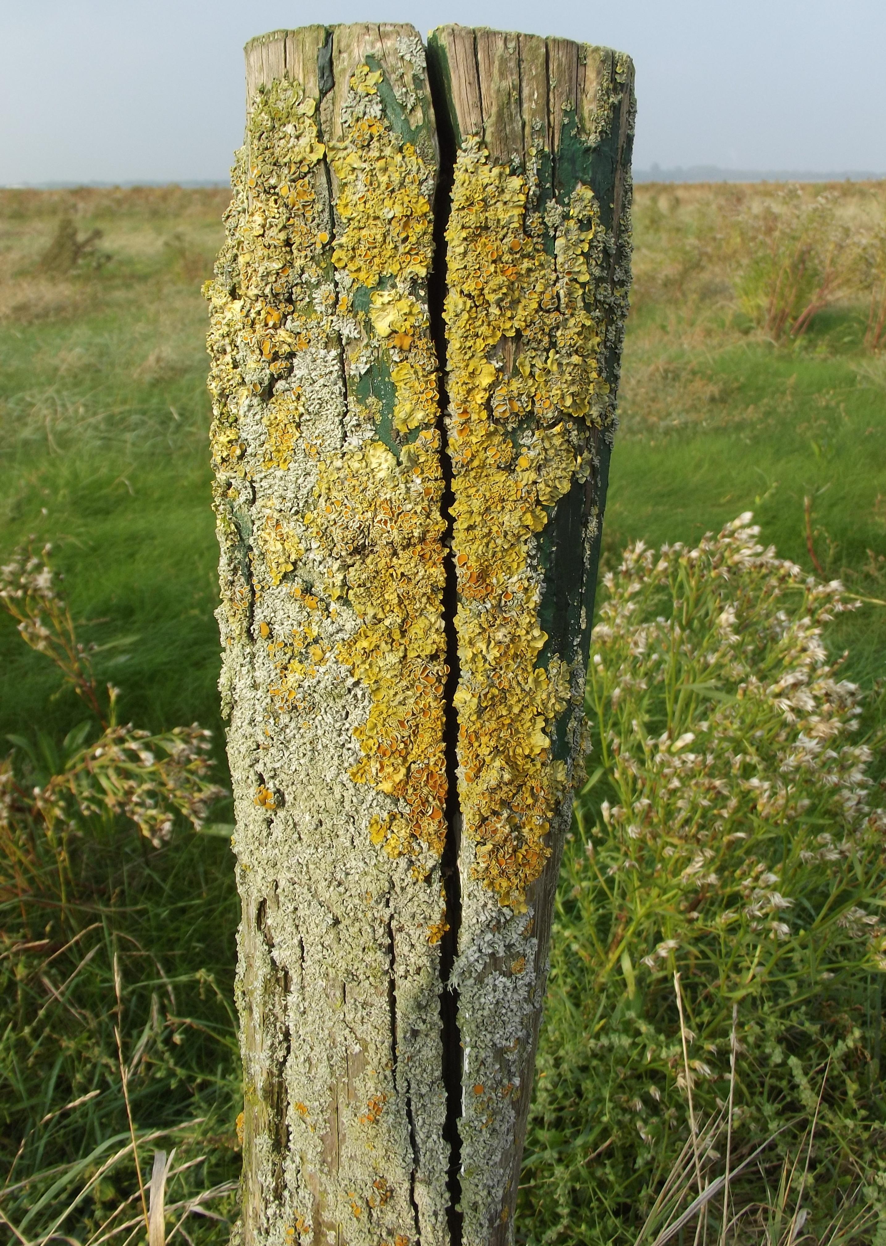 Kostenlose Foto Baum Gras Rock Holz Blume Kofferraum Alt