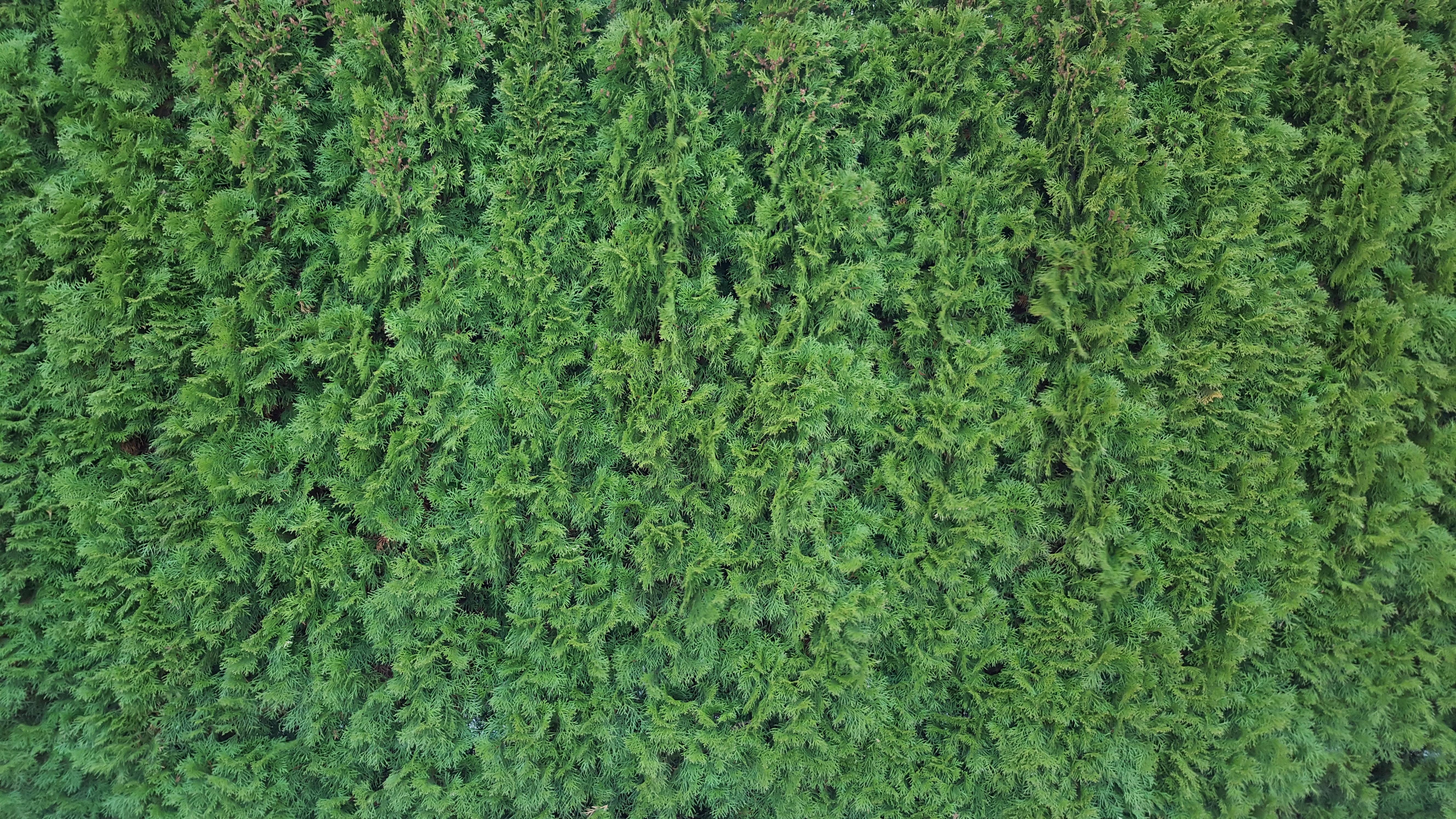 Kostenlose foto Baum Gras Struktur Textur Busch Muster